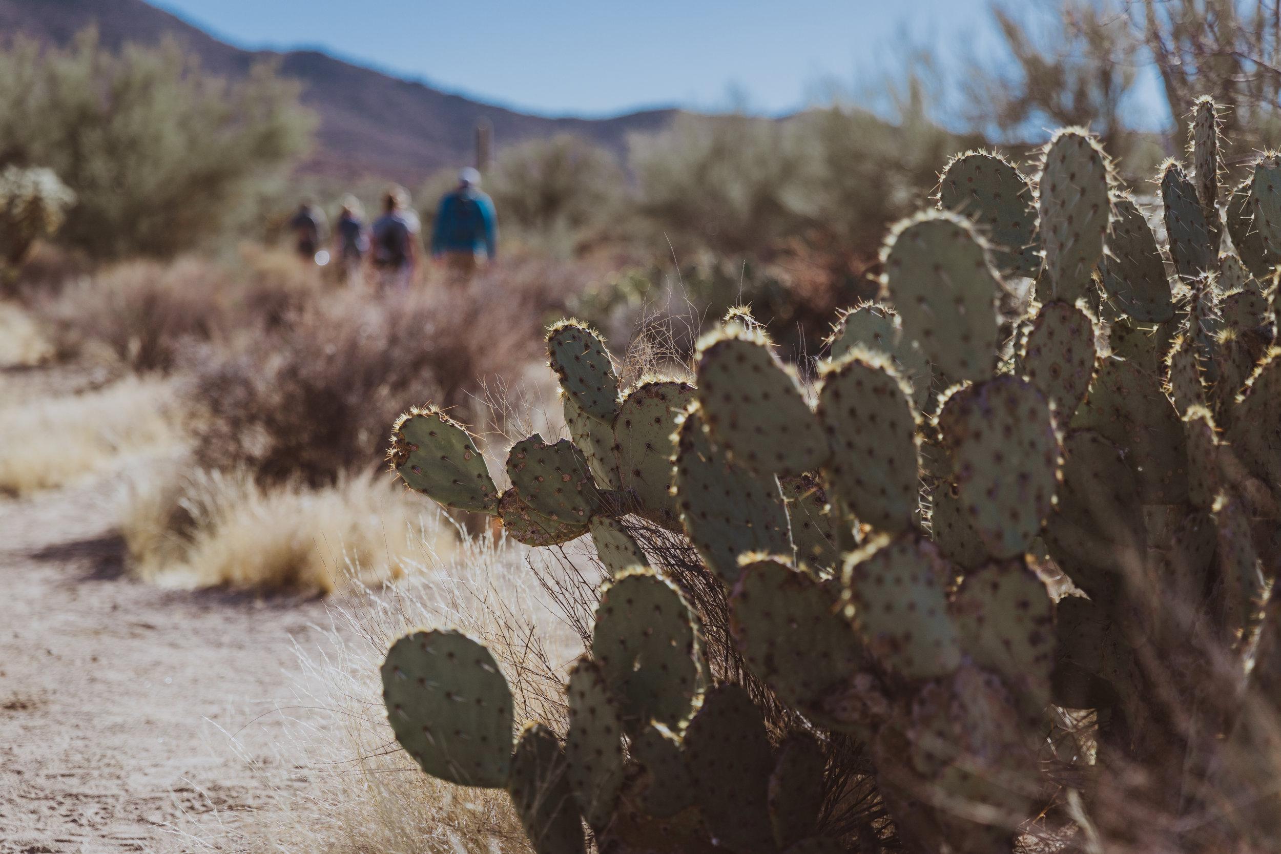 Saguaro Edits (58 of 160).jpg