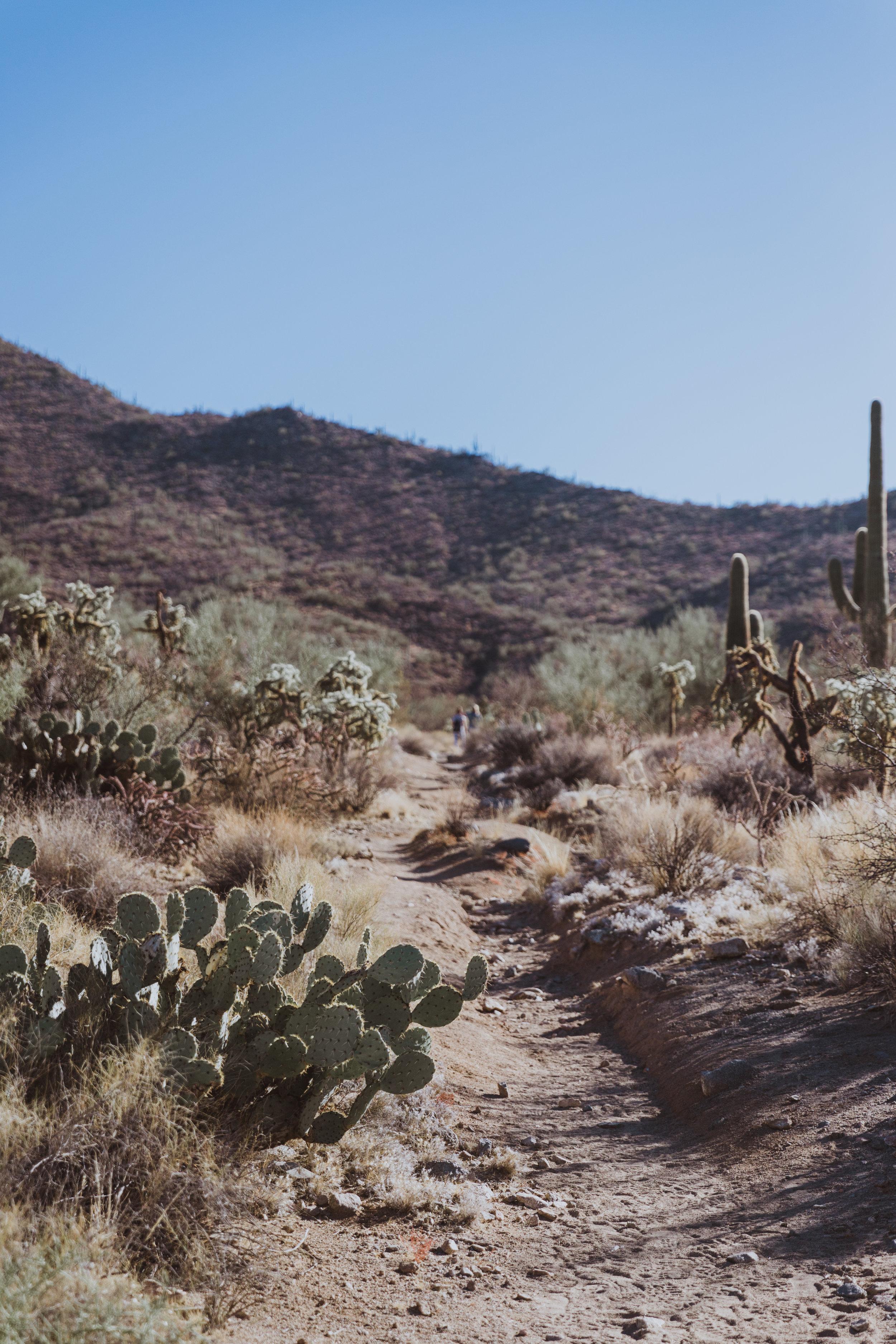 Saguaro Edits (73 of 160).jpg