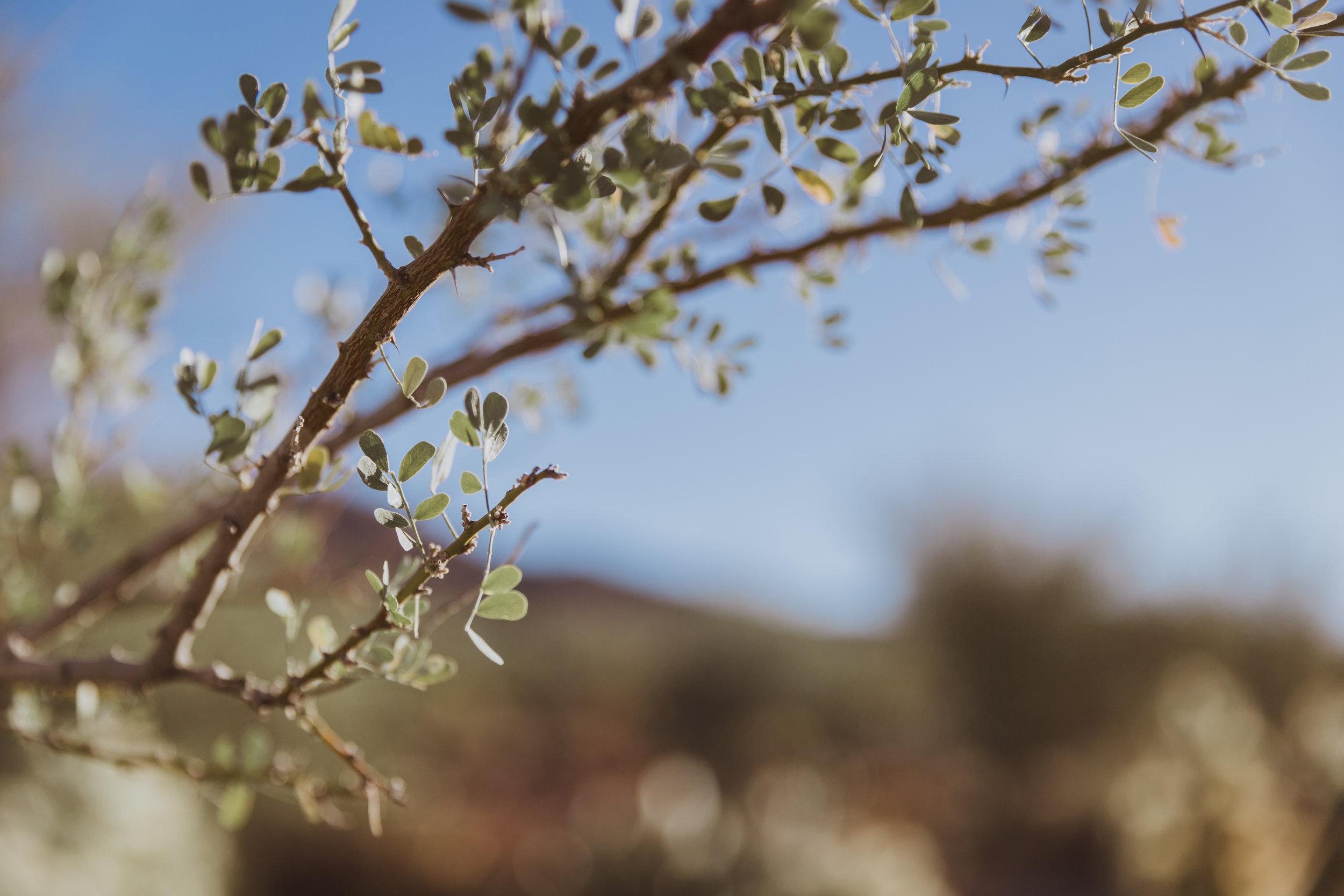 Saguaro Edits (130 of 160).jpg