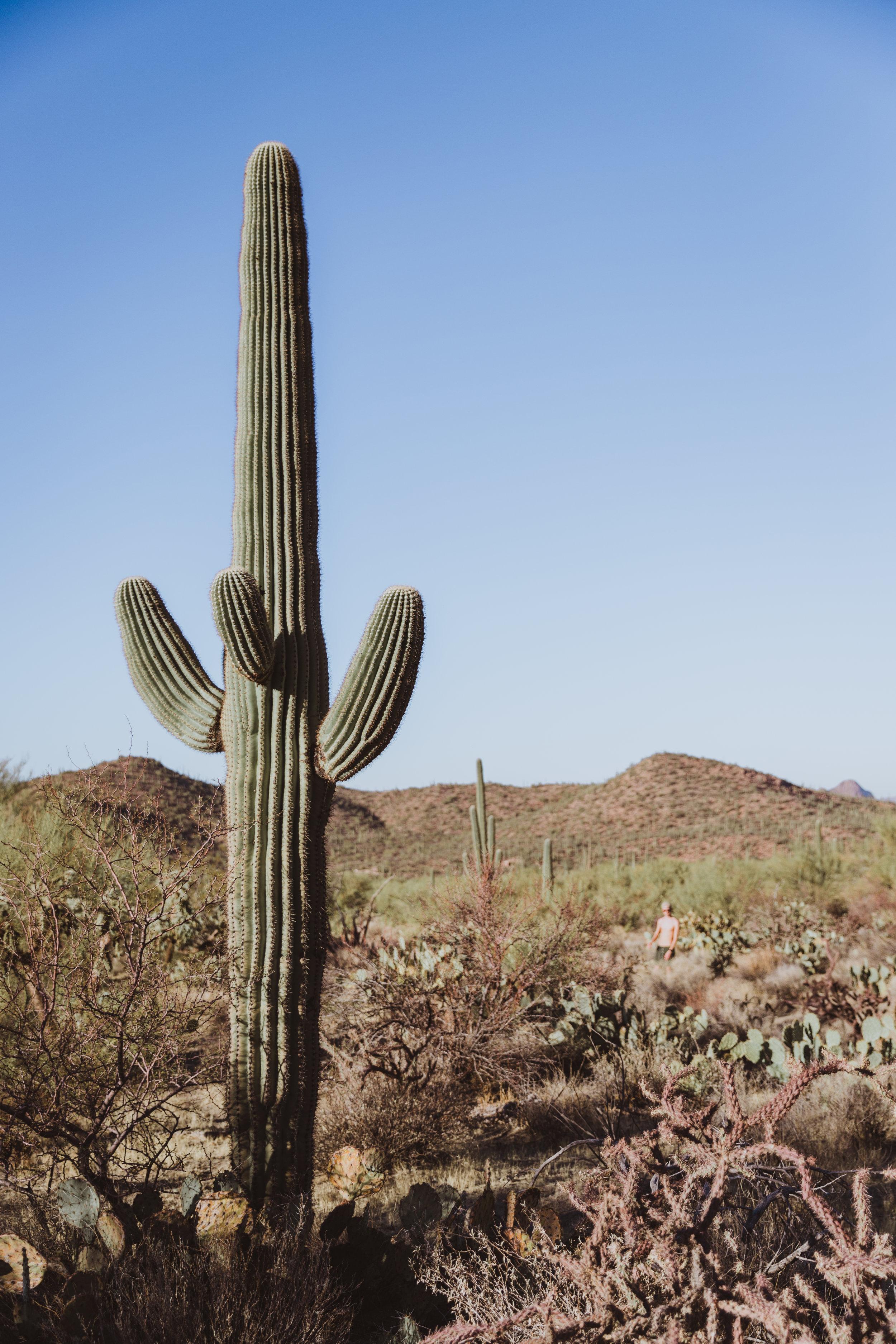 Saguaro Edits (136 of 160).jpg