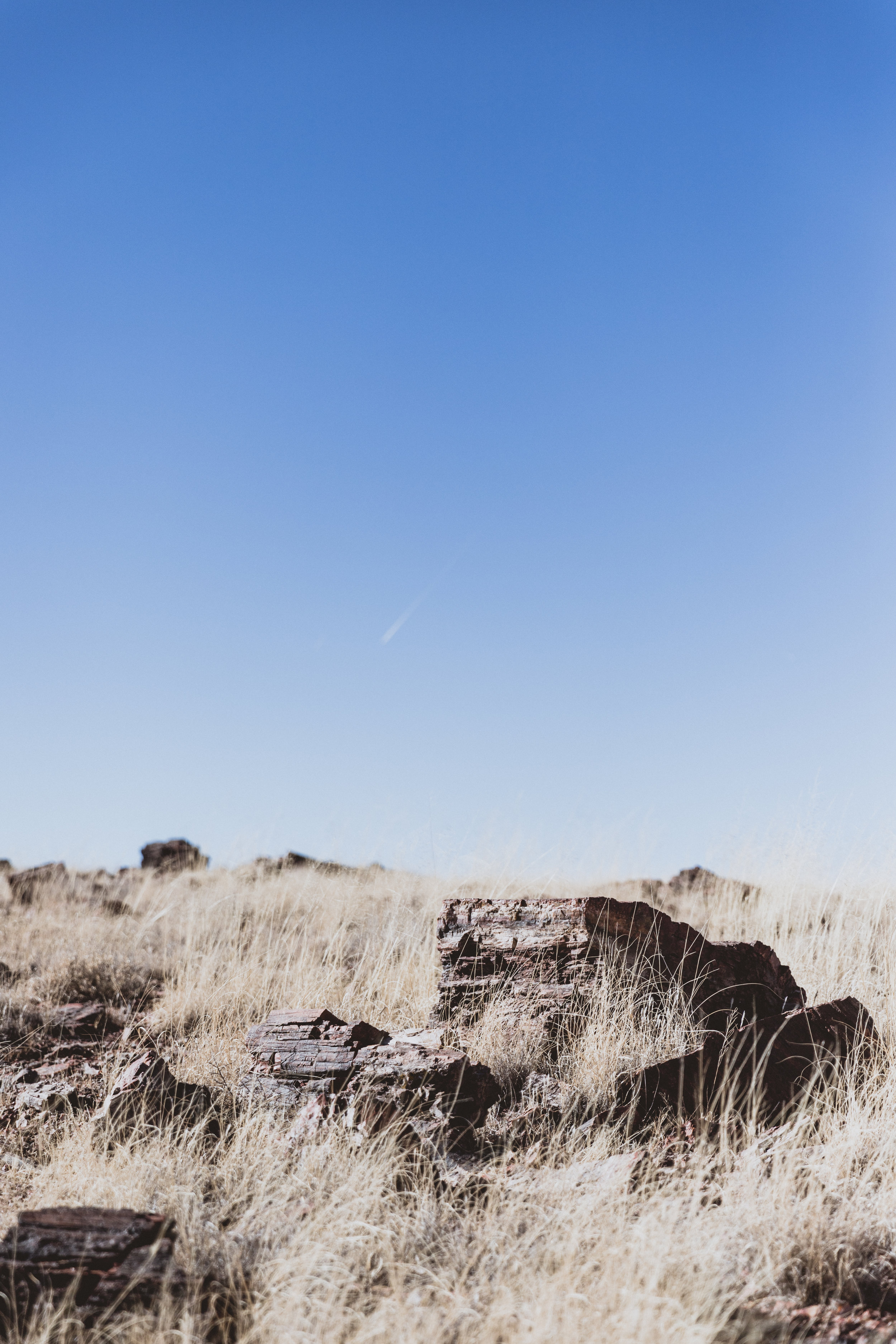 Petrified Forest (30 of 149).jpg