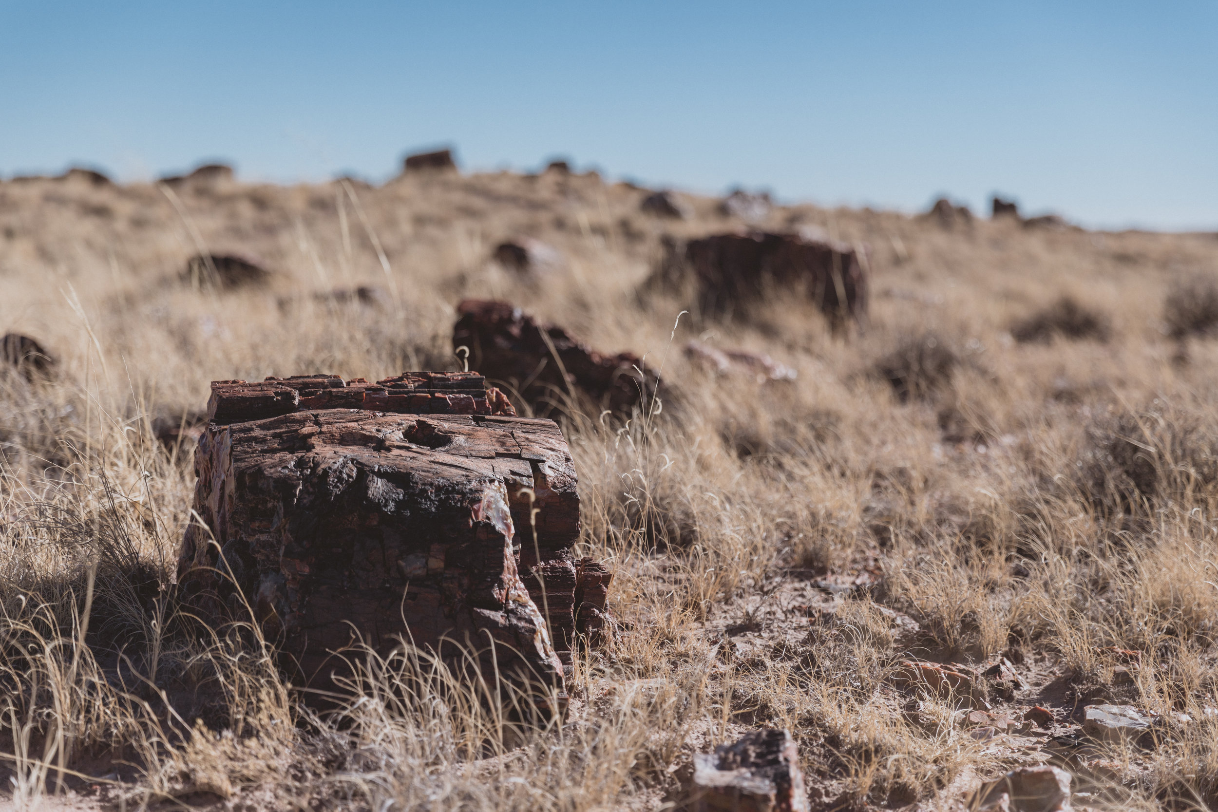 Petrified Forest (19 of 149).jpg