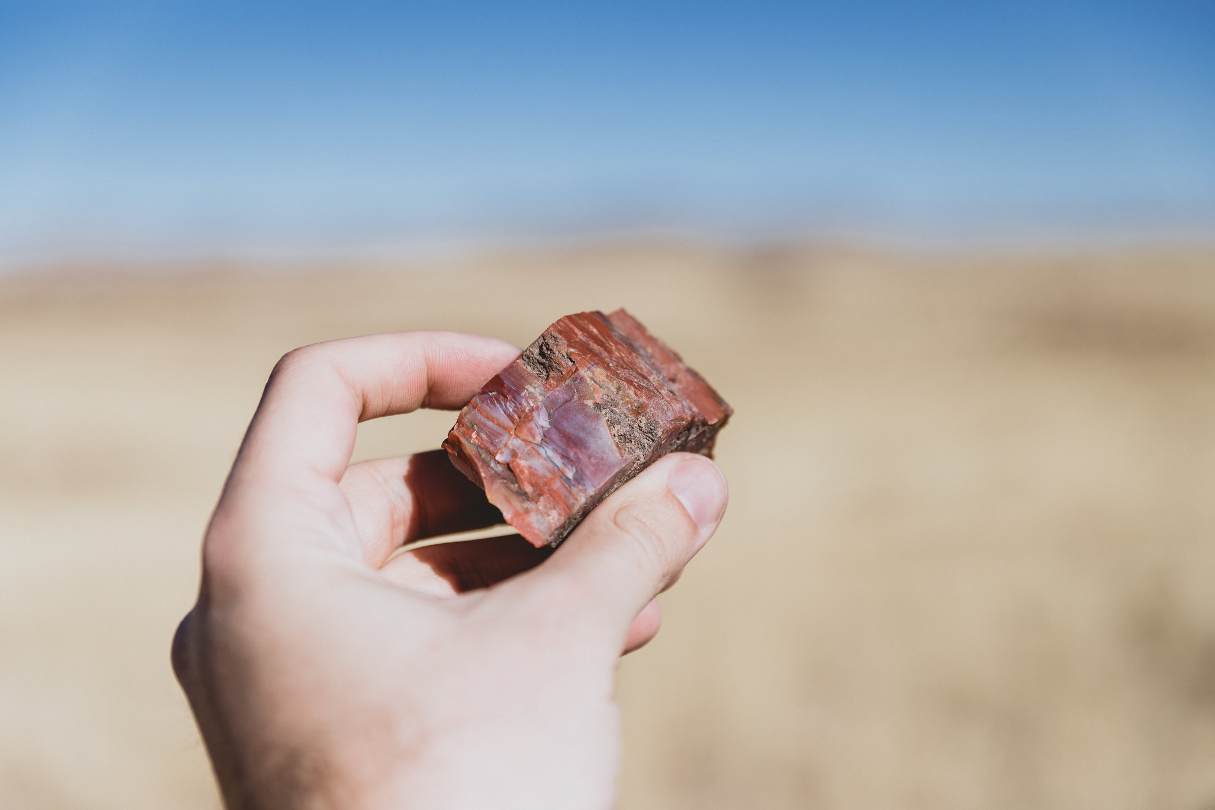 Petrified Forest (31 of 149).jpg