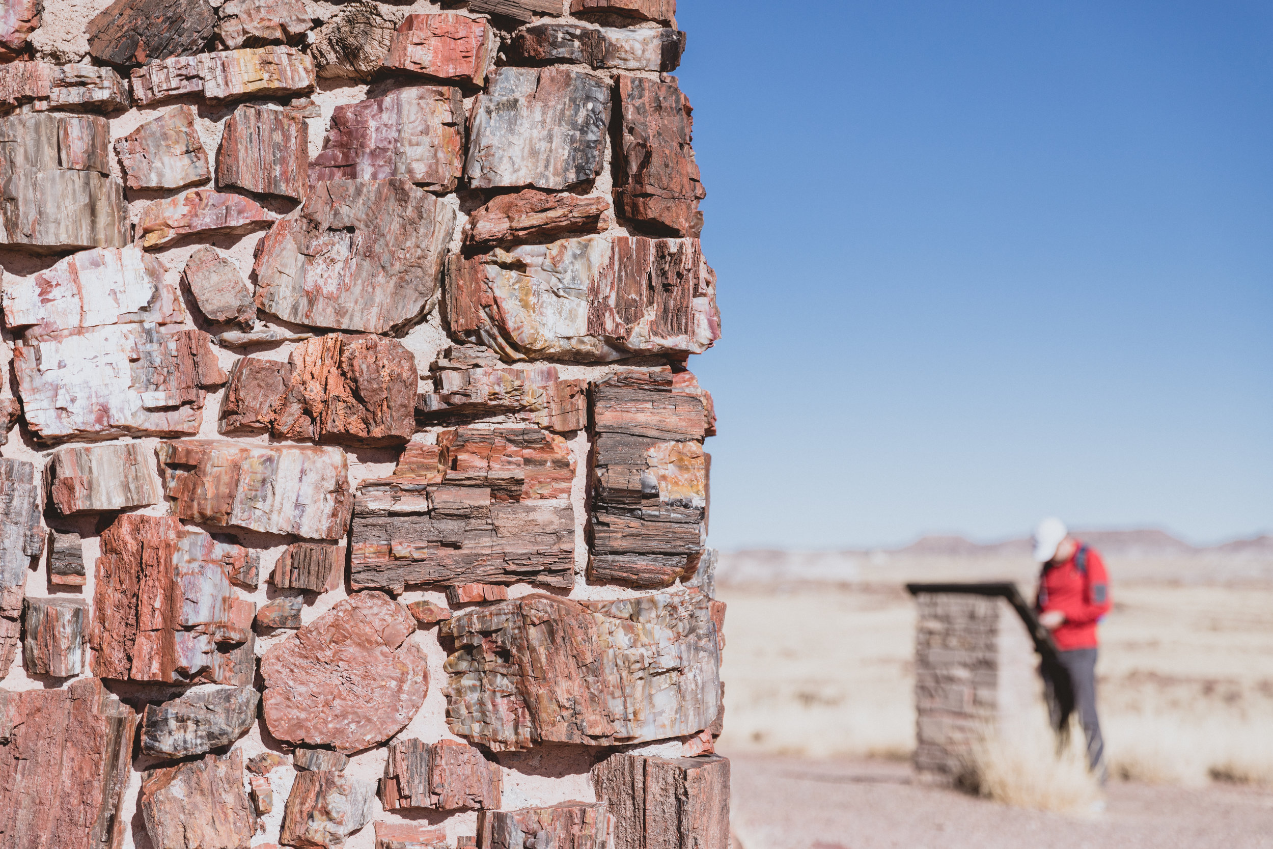 Petrified Forest (36 of 149).jpg