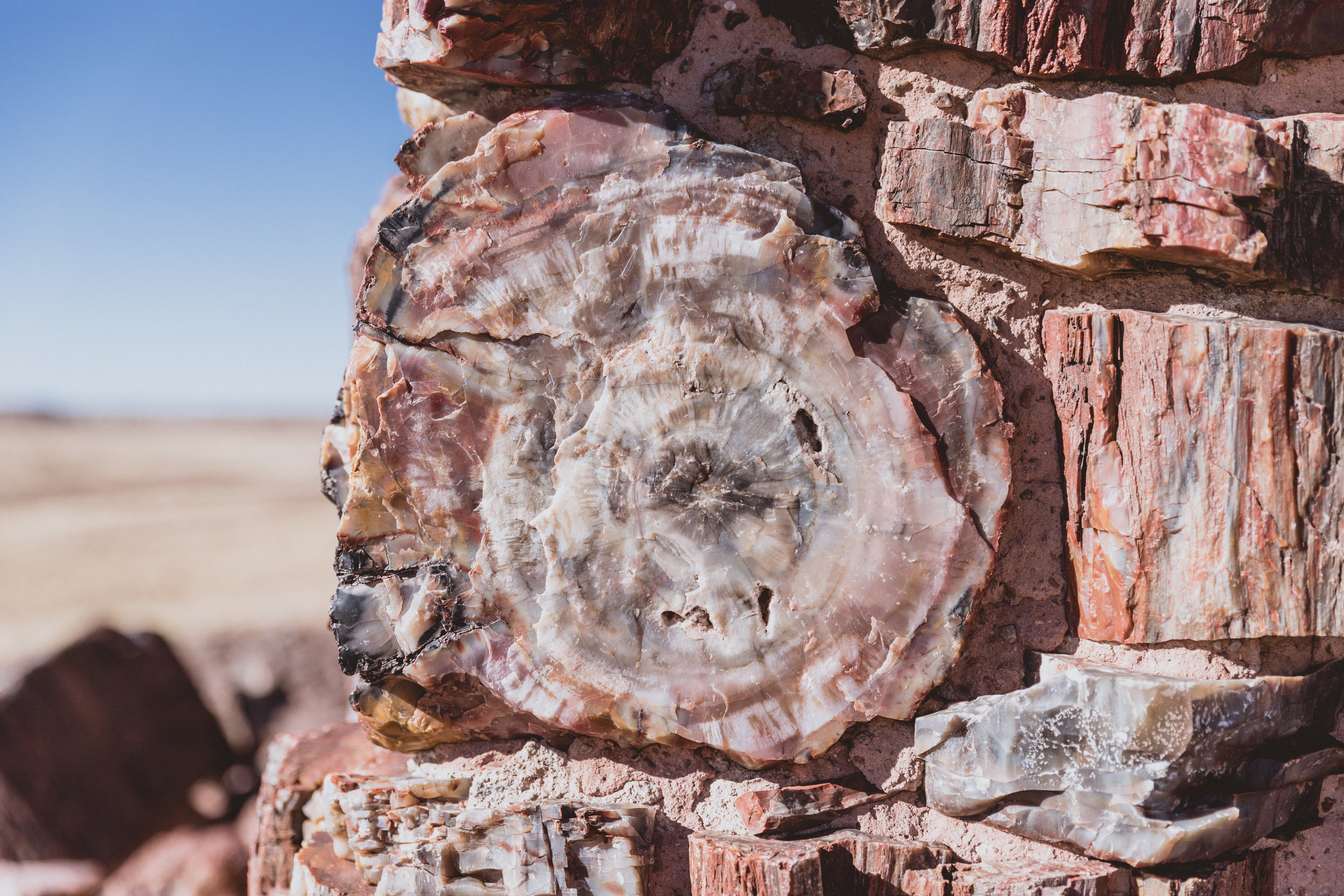Petrified Forest (37 of 149).jpg