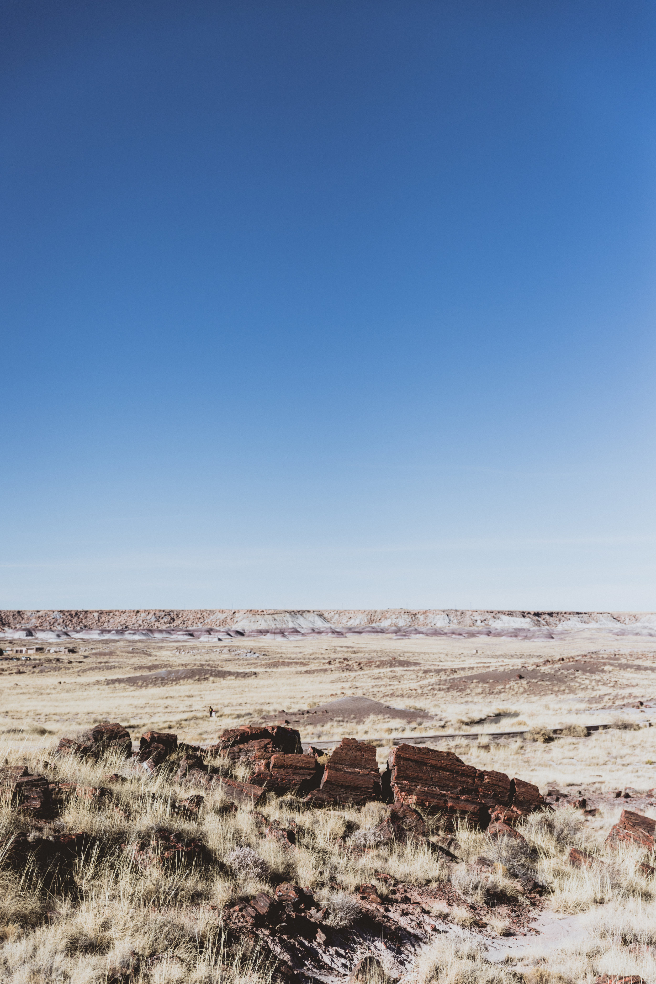 Petrified Forest (43 of 149).jpg