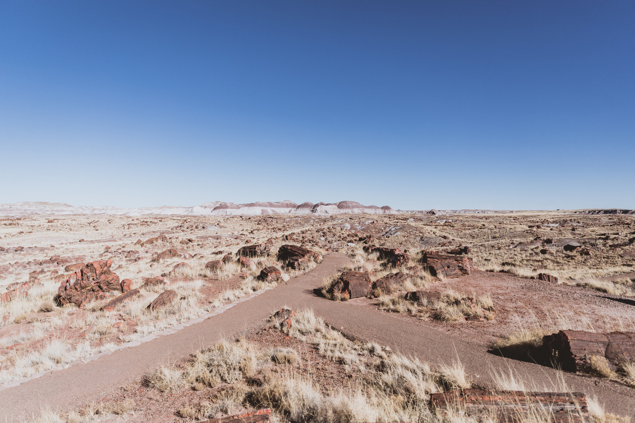 Petrified Forest (41 of 149).jpg