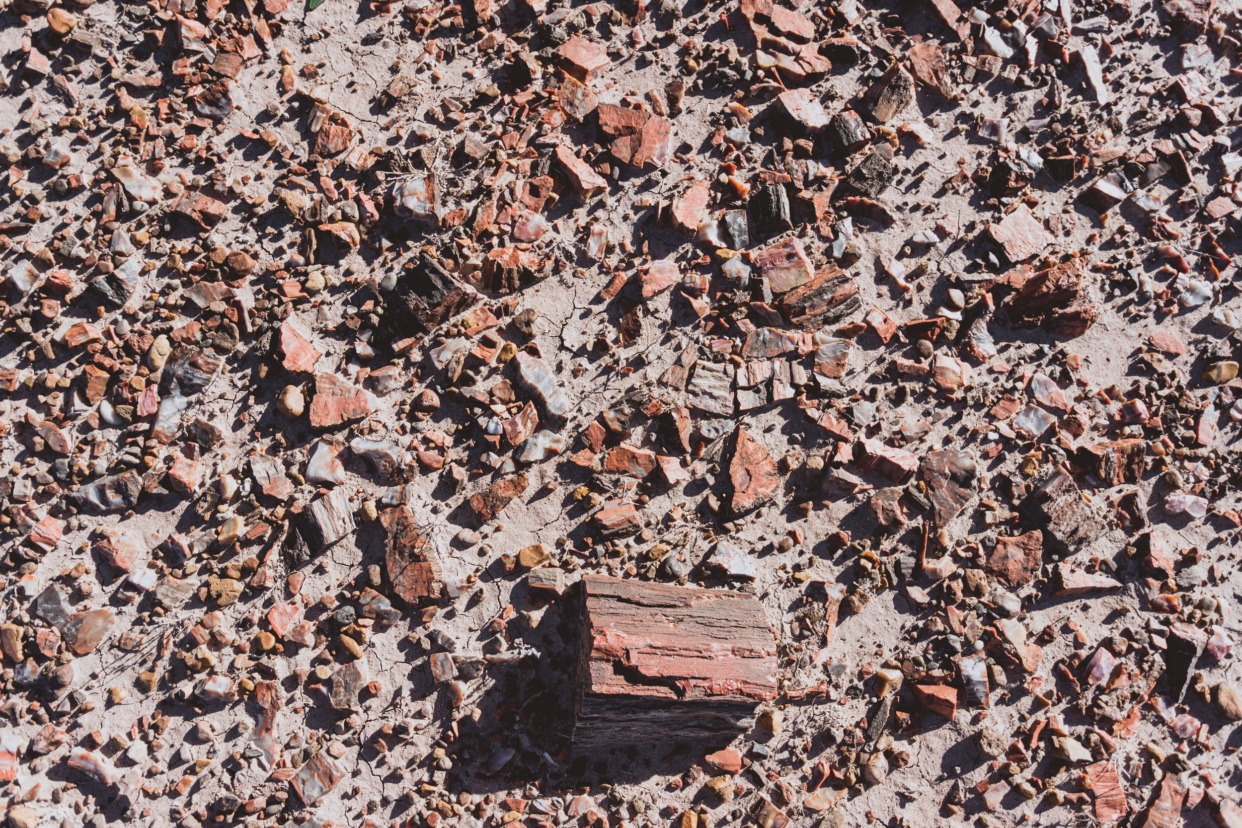 Petrified Forest (70 of 149).jpg
