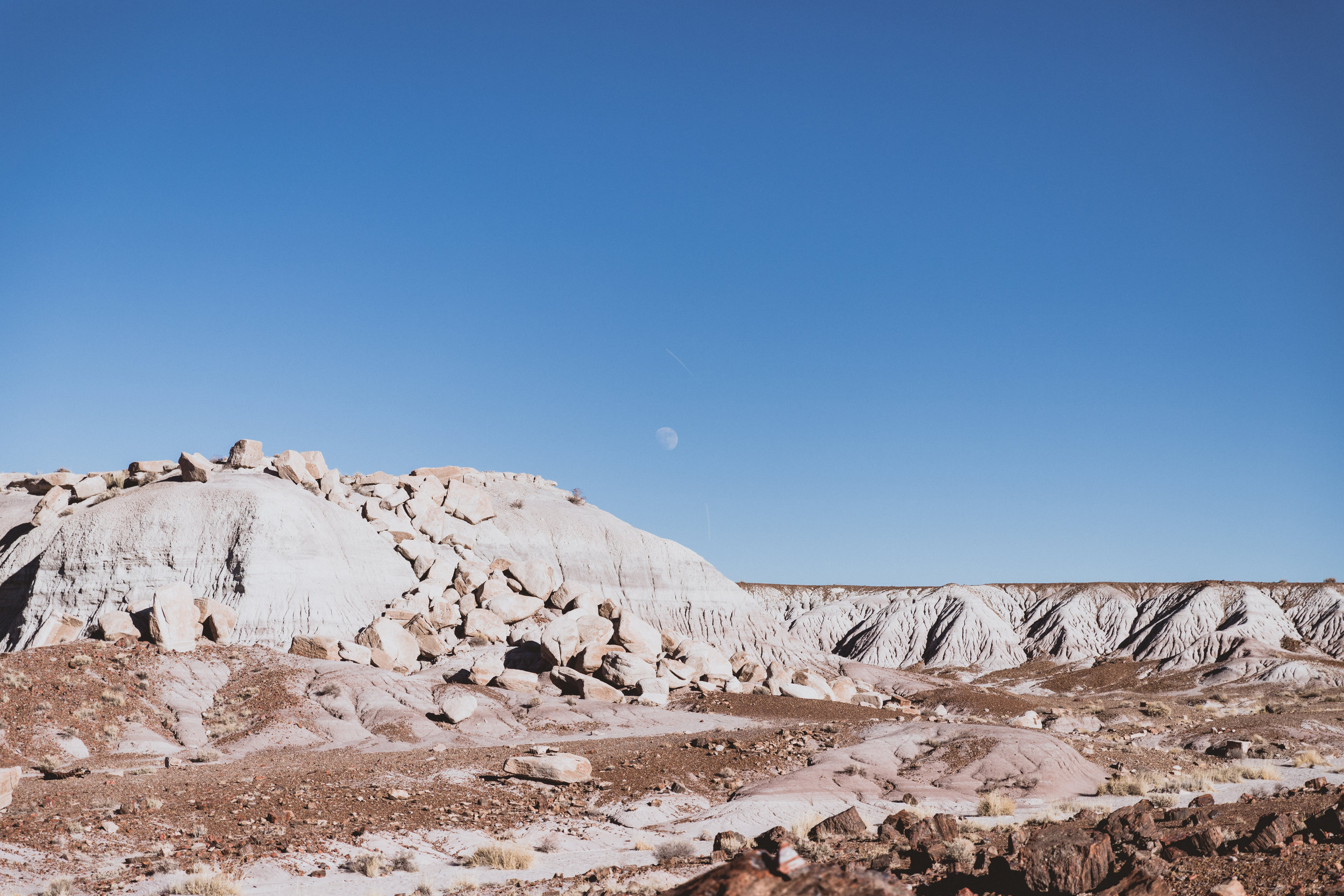 Petrified Forest (74 of 149).jpg