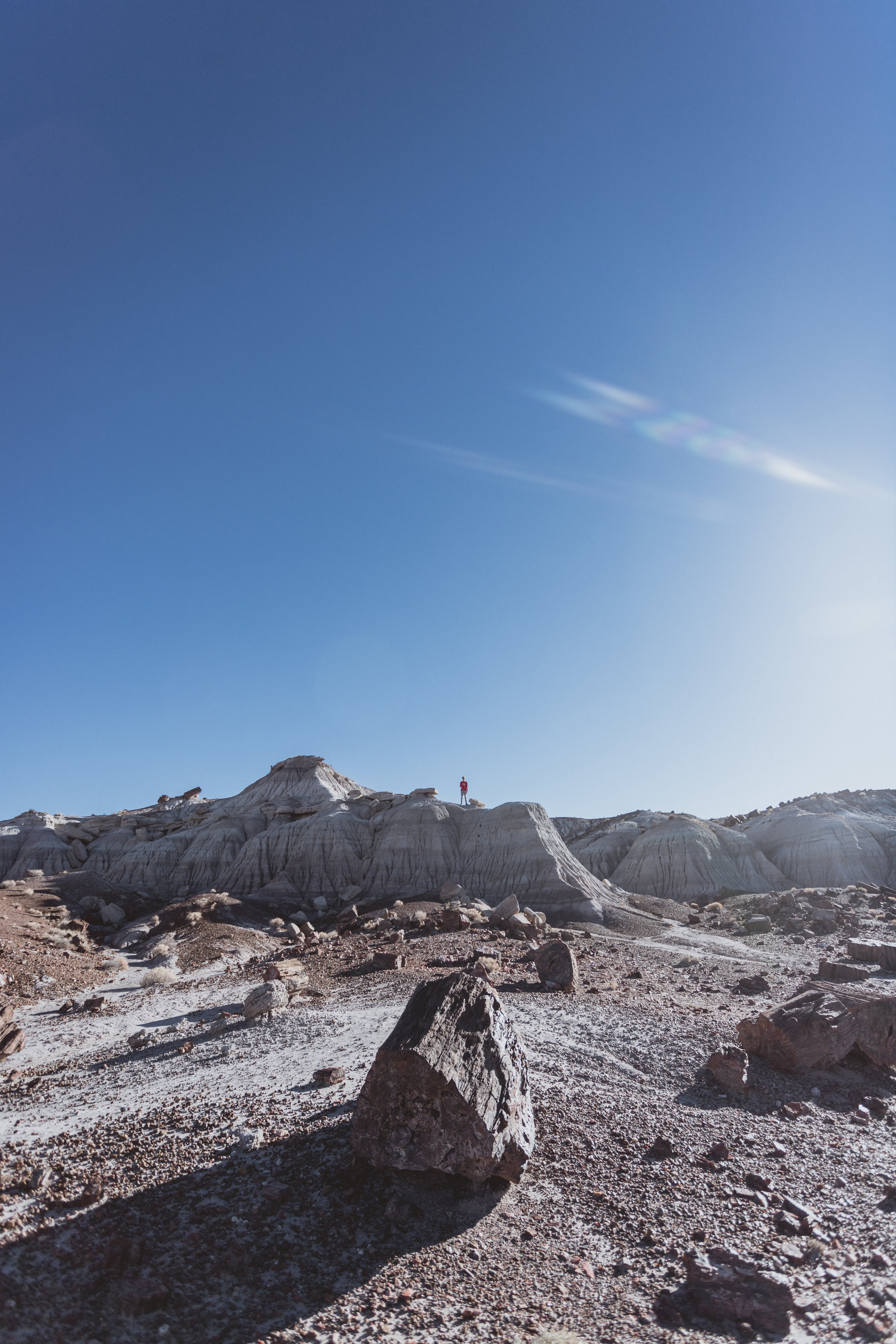 Petrified Forest (73 of 149).jpg