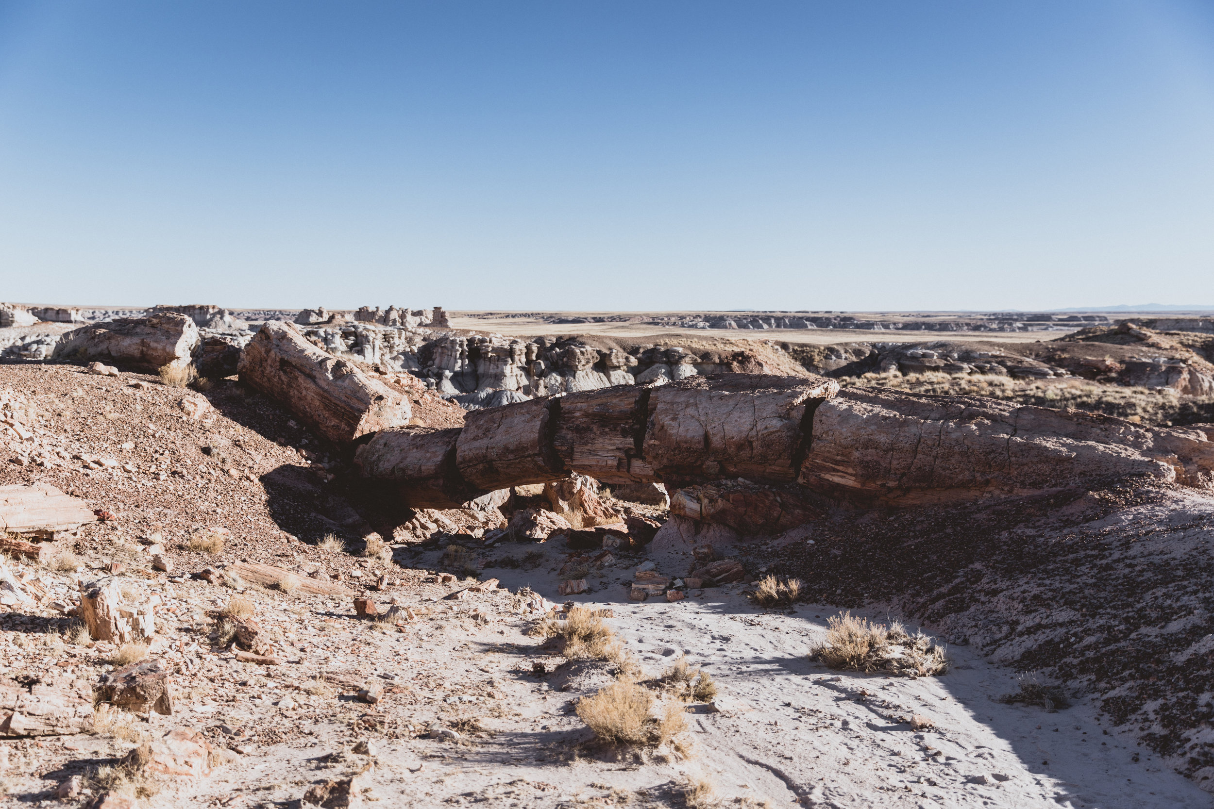 Petrified Forest (86 of 149).jpg