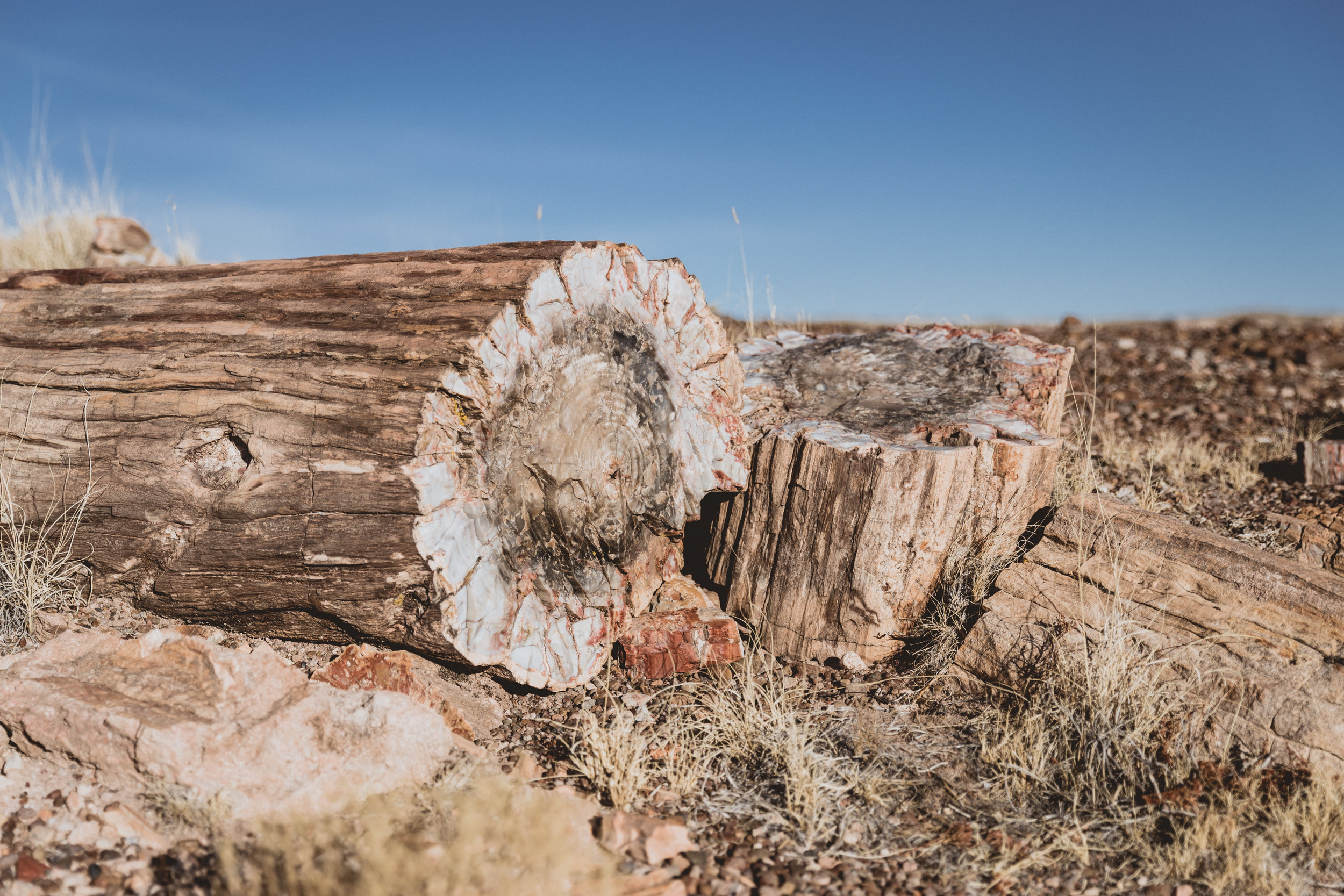 Petrified Forest (94 of 149).jpg