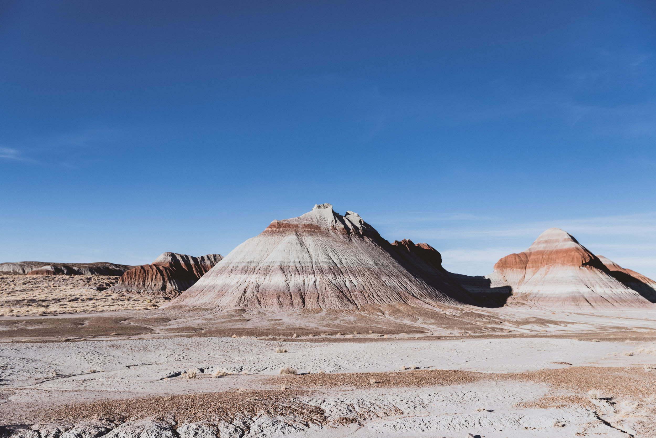 Petrified Forest (101 of 149).jpg