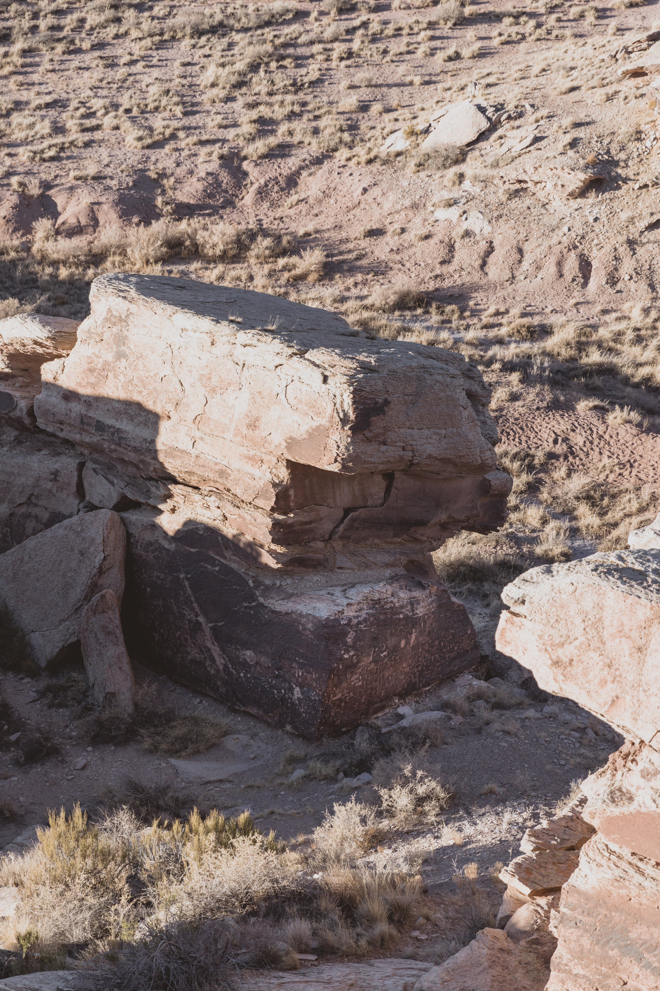 Petrified Forest (112 of 149).jpg