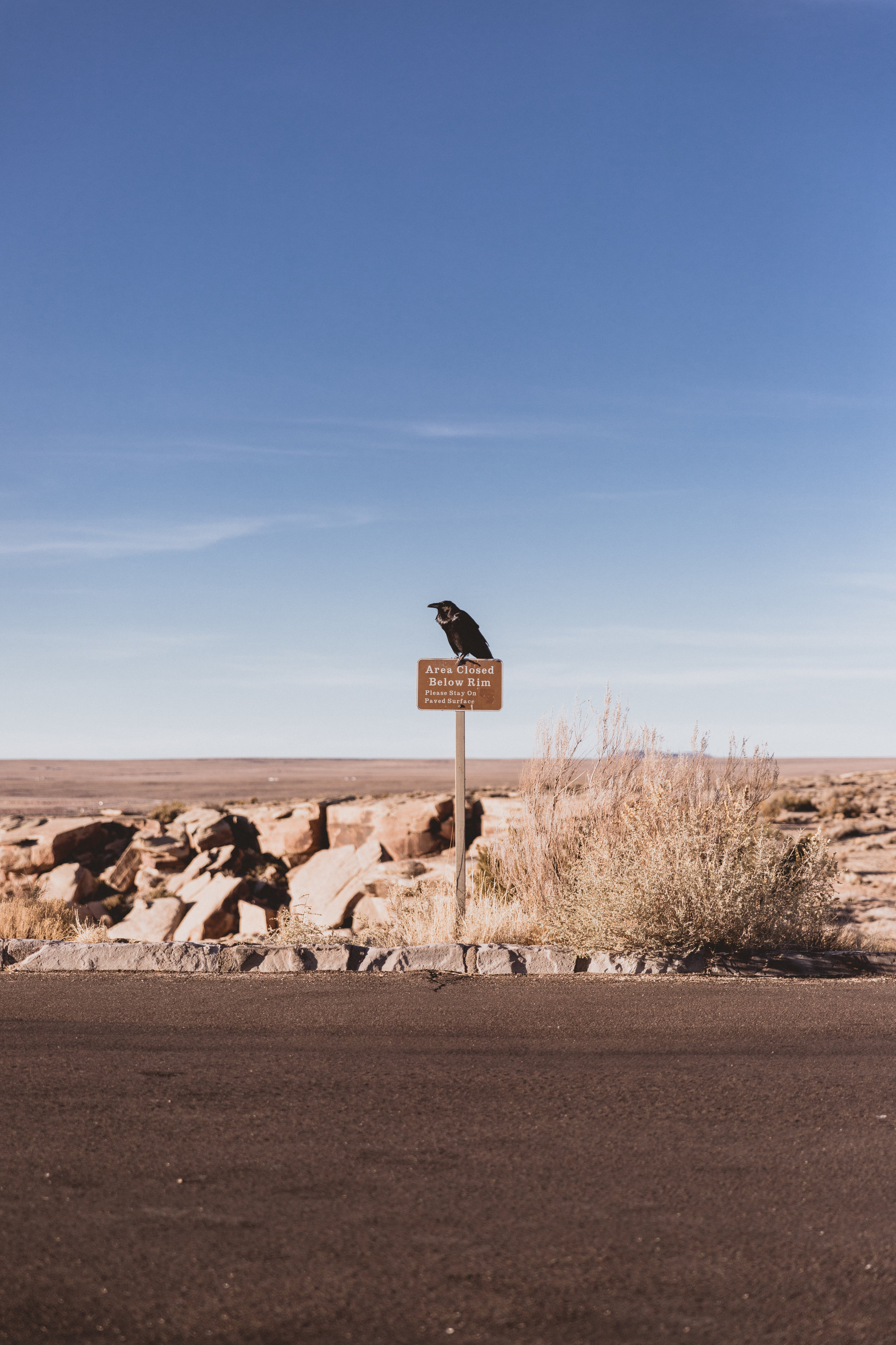 Petrified Forest (113 of 149).jpg
