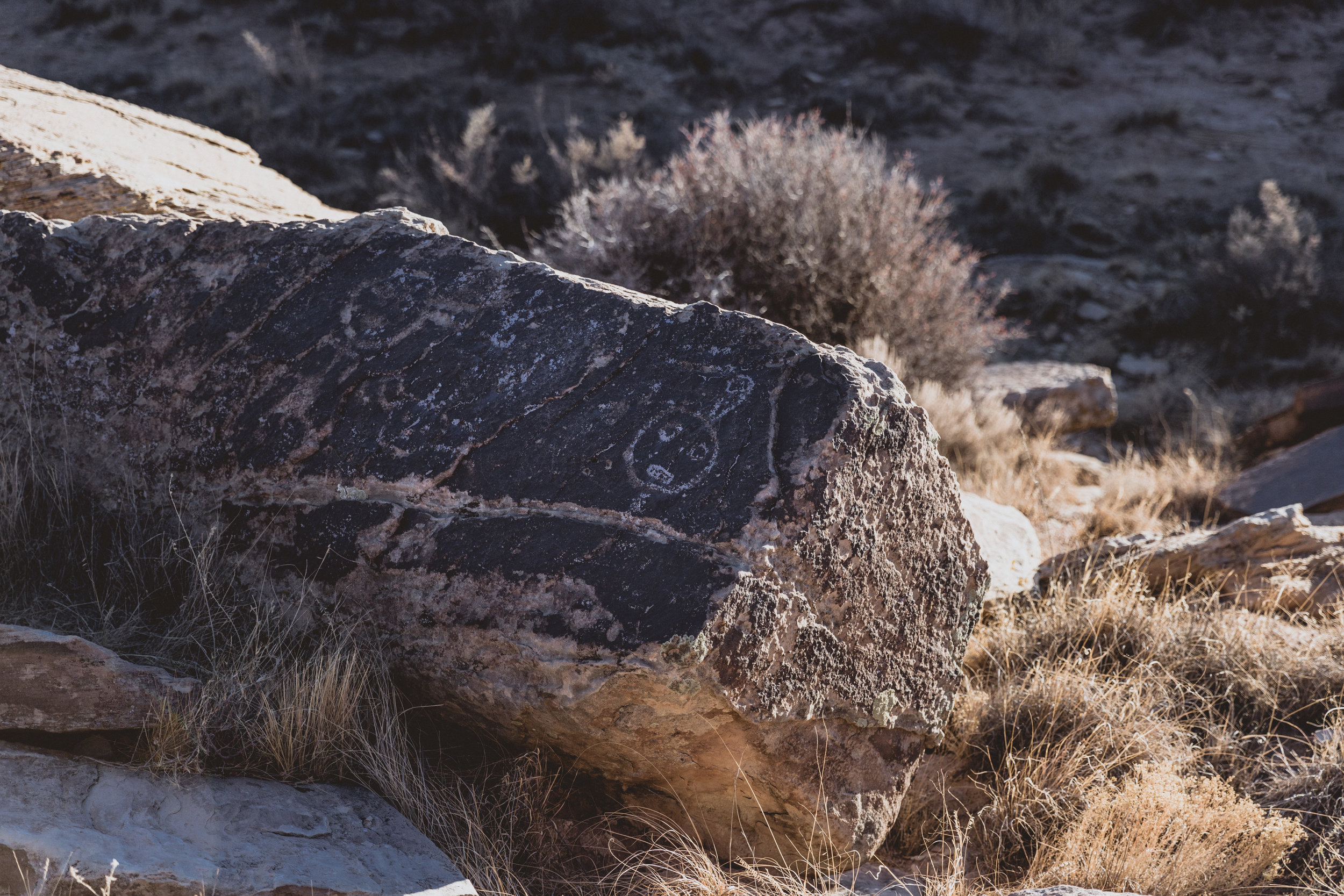 Petrified Forest (116 of 149).jpg