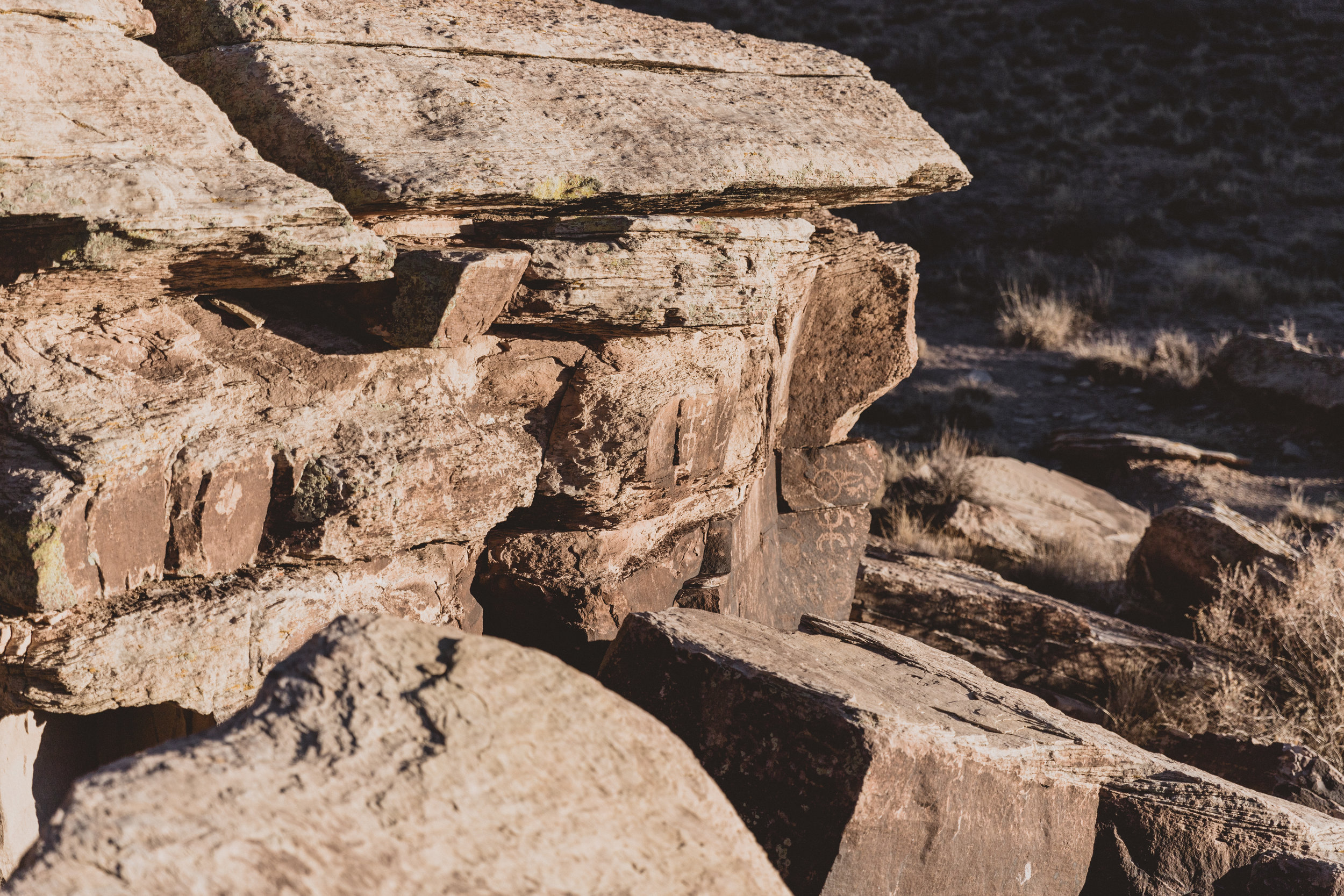Petrified Forest (120 of 149).jpg