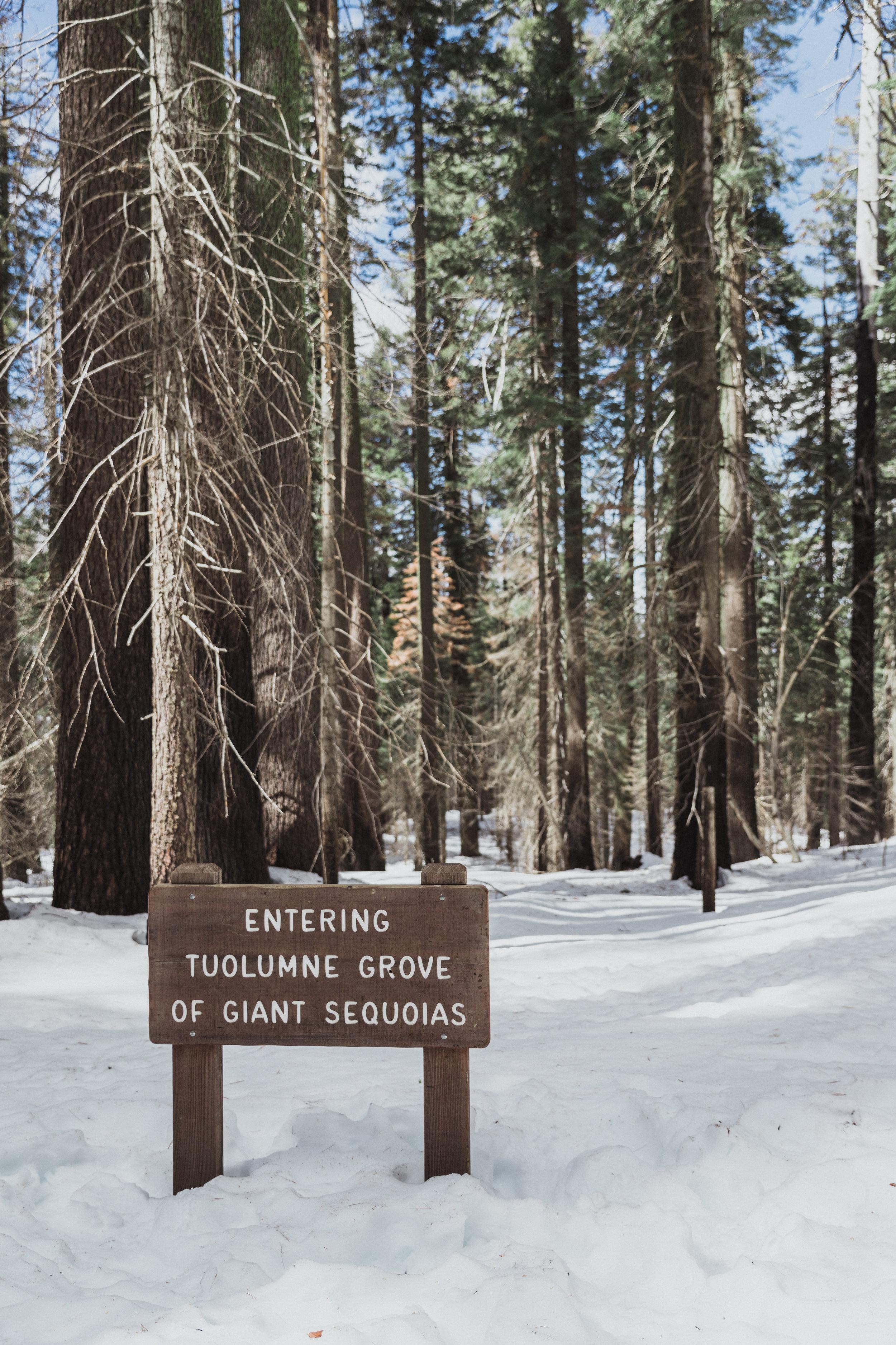 Yosemite Edits (174 of 215).jpg