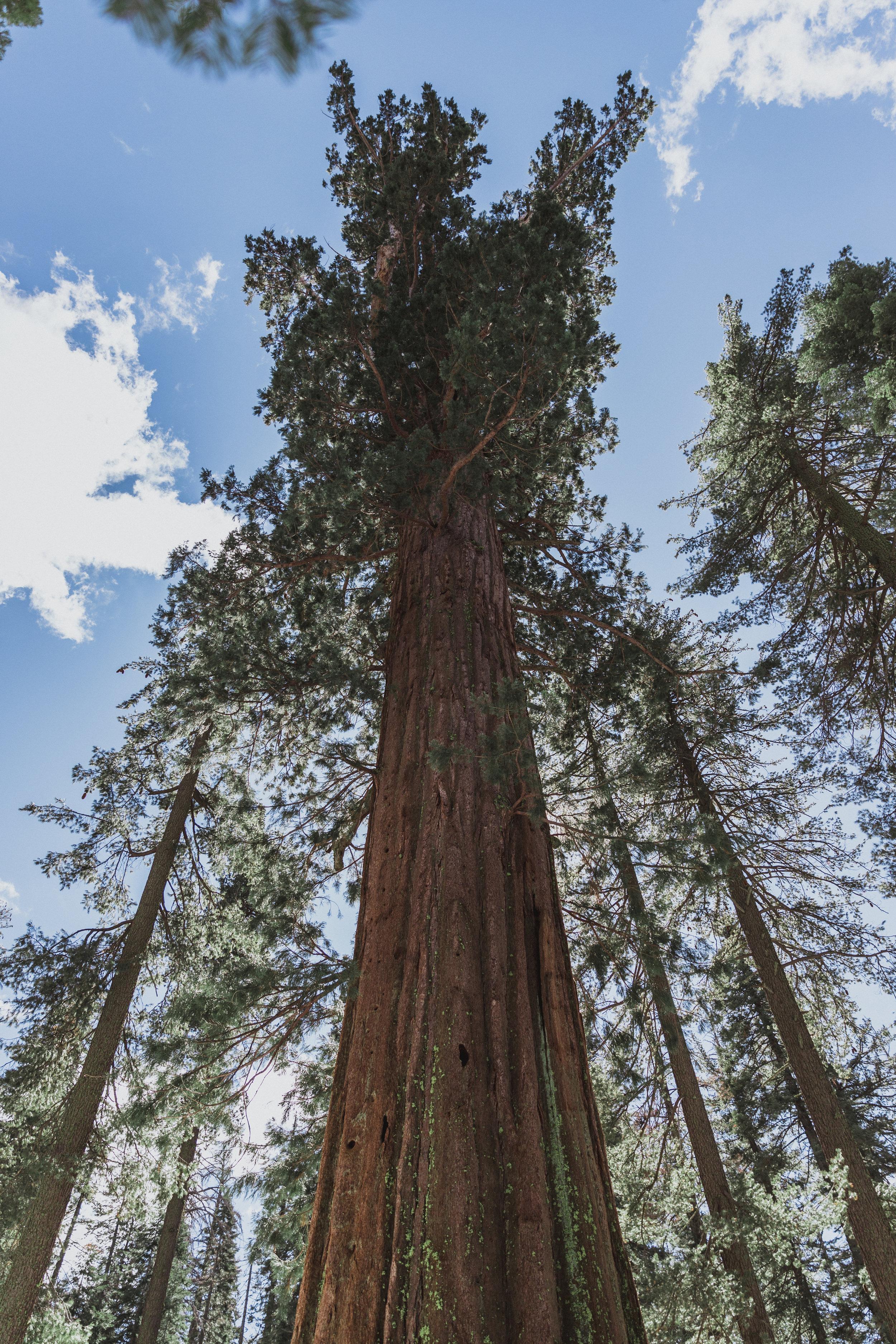 Yosemite Edits (175 of 215).jpg
