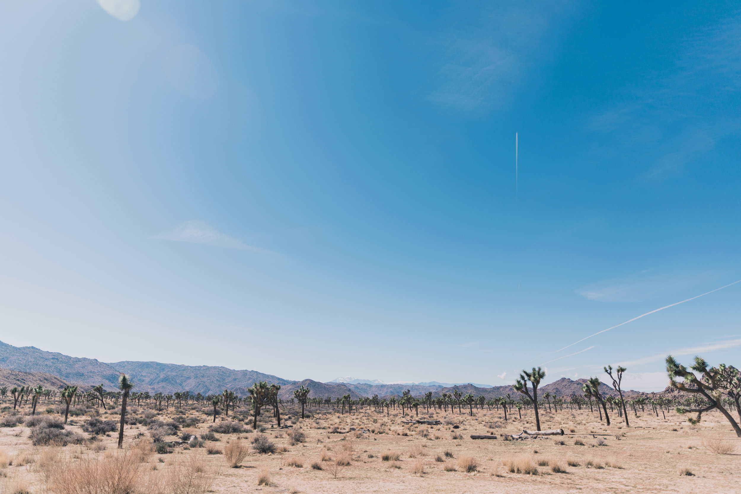 Joshua Tree Edits (20 of 156).jpg