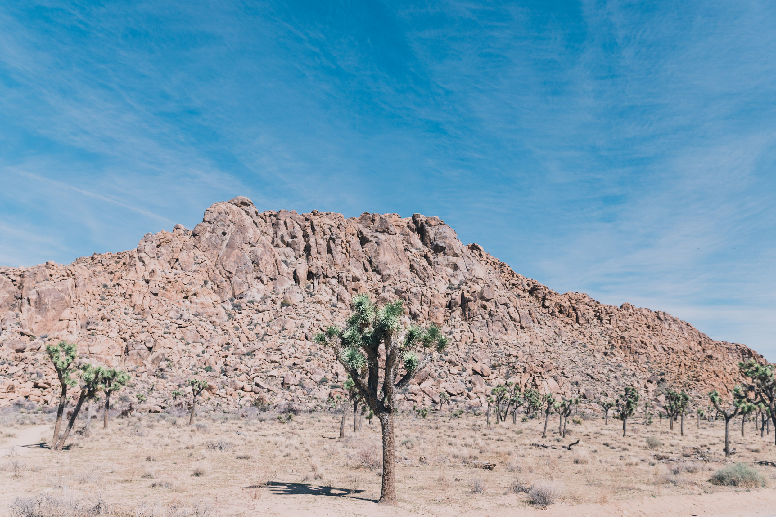 Joshua Tree Edits (17 of 156).jpg