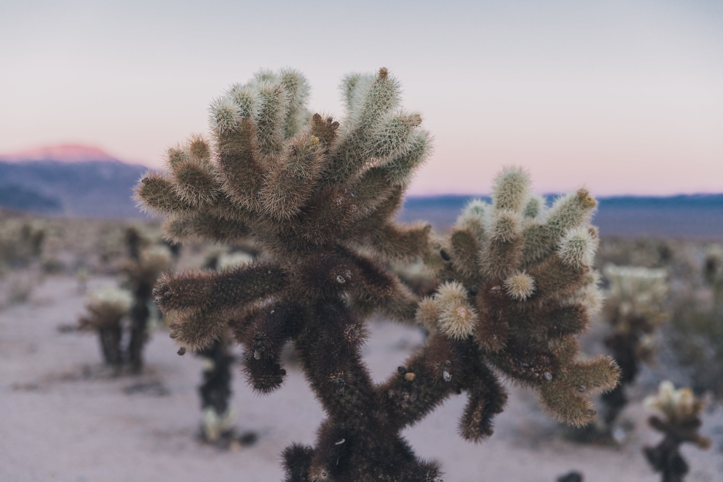 Joshua Tree Edits (137 of 156).jpg