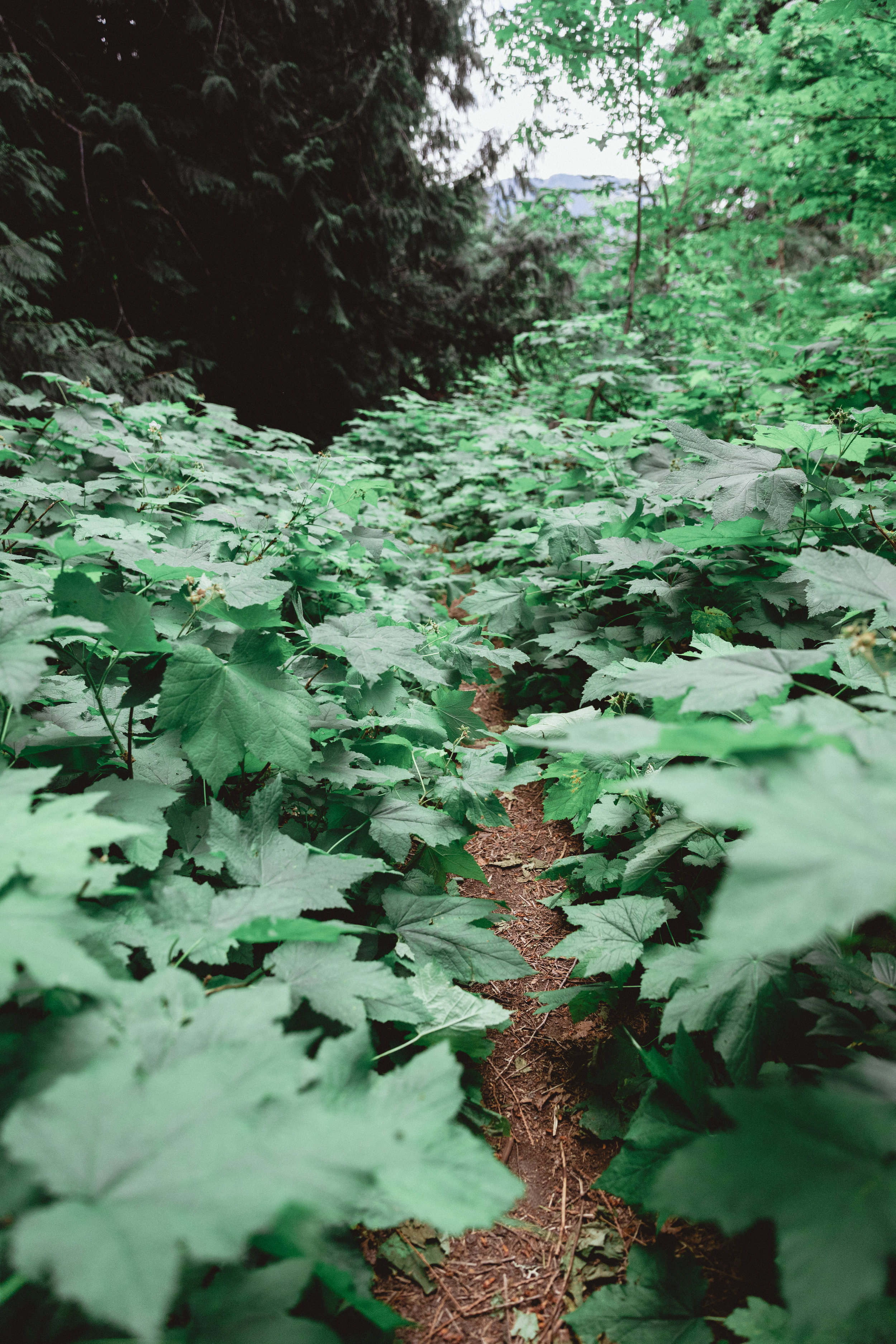 North Cascades Edits-113.jpg