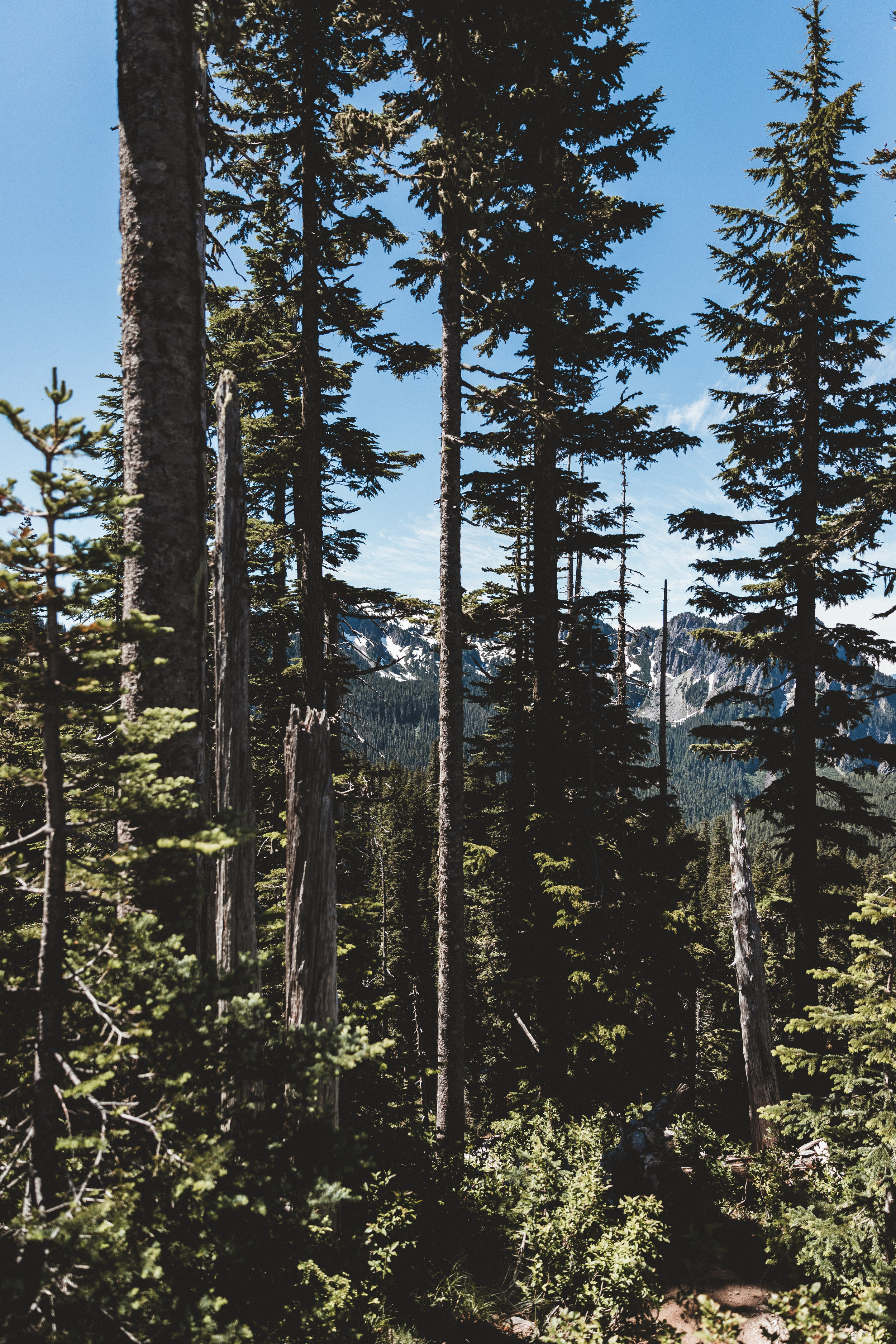 Rainier Edits-38.jpg