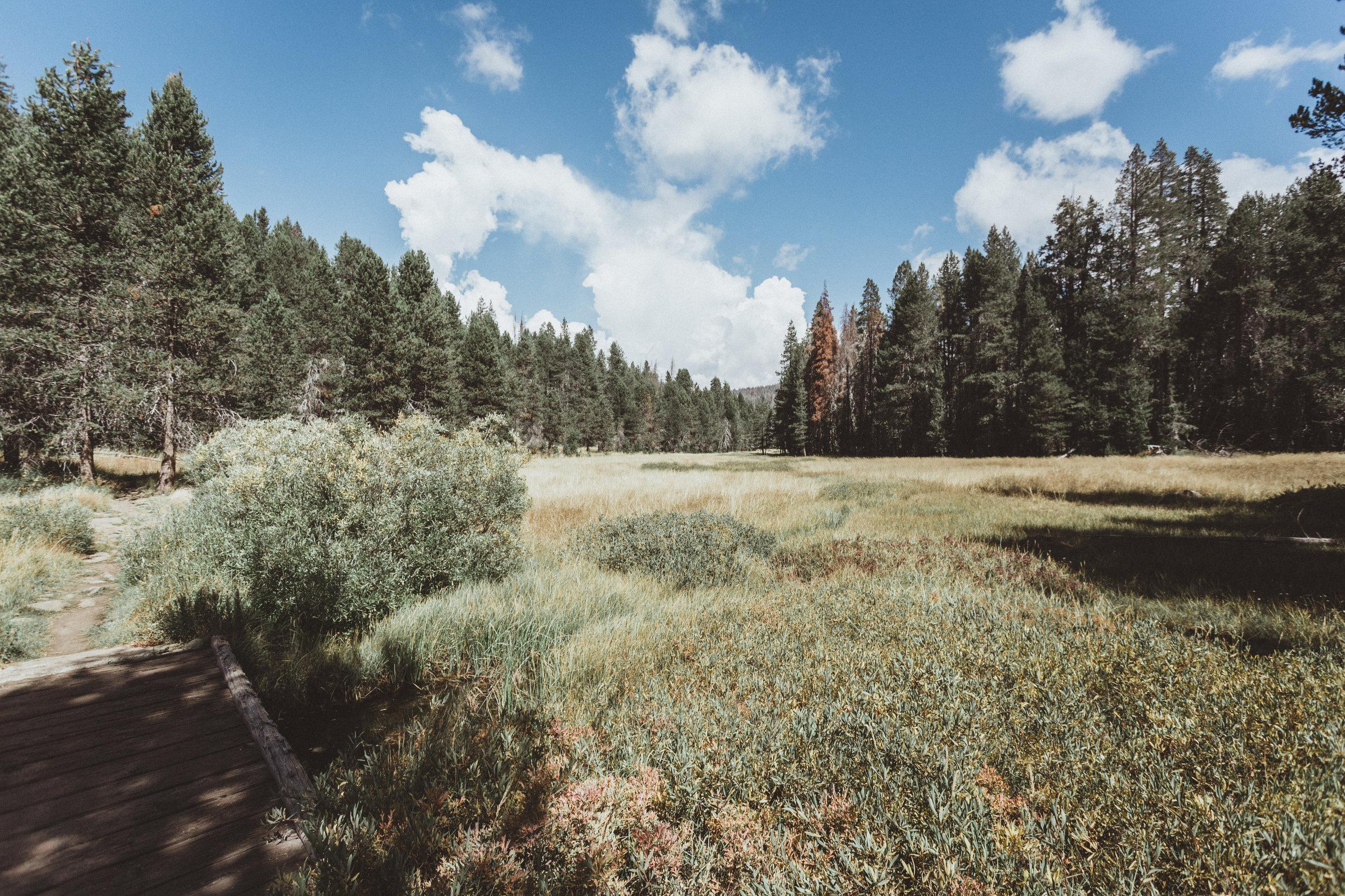Yosemite16 Edits-2.jpg