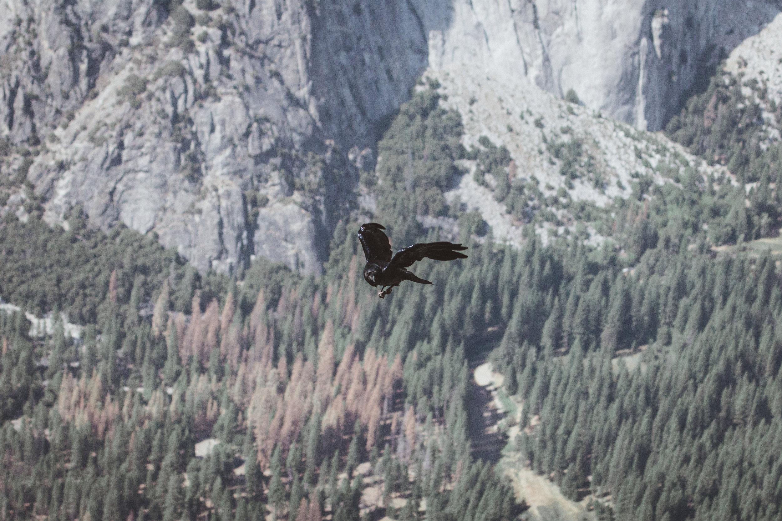 Yosemite16 Edits-22.jpg