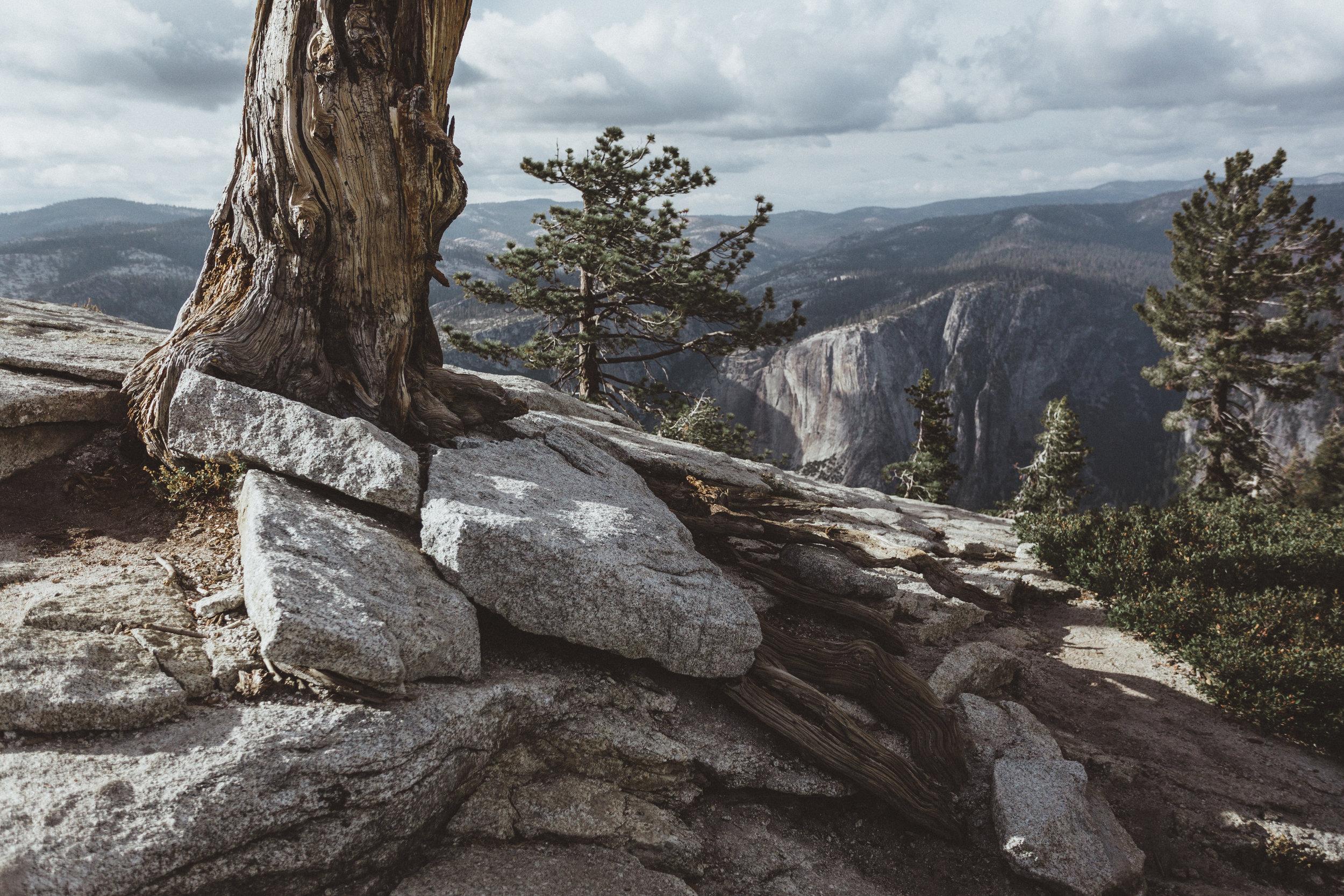 Yosemite16 Edits-32.jpg