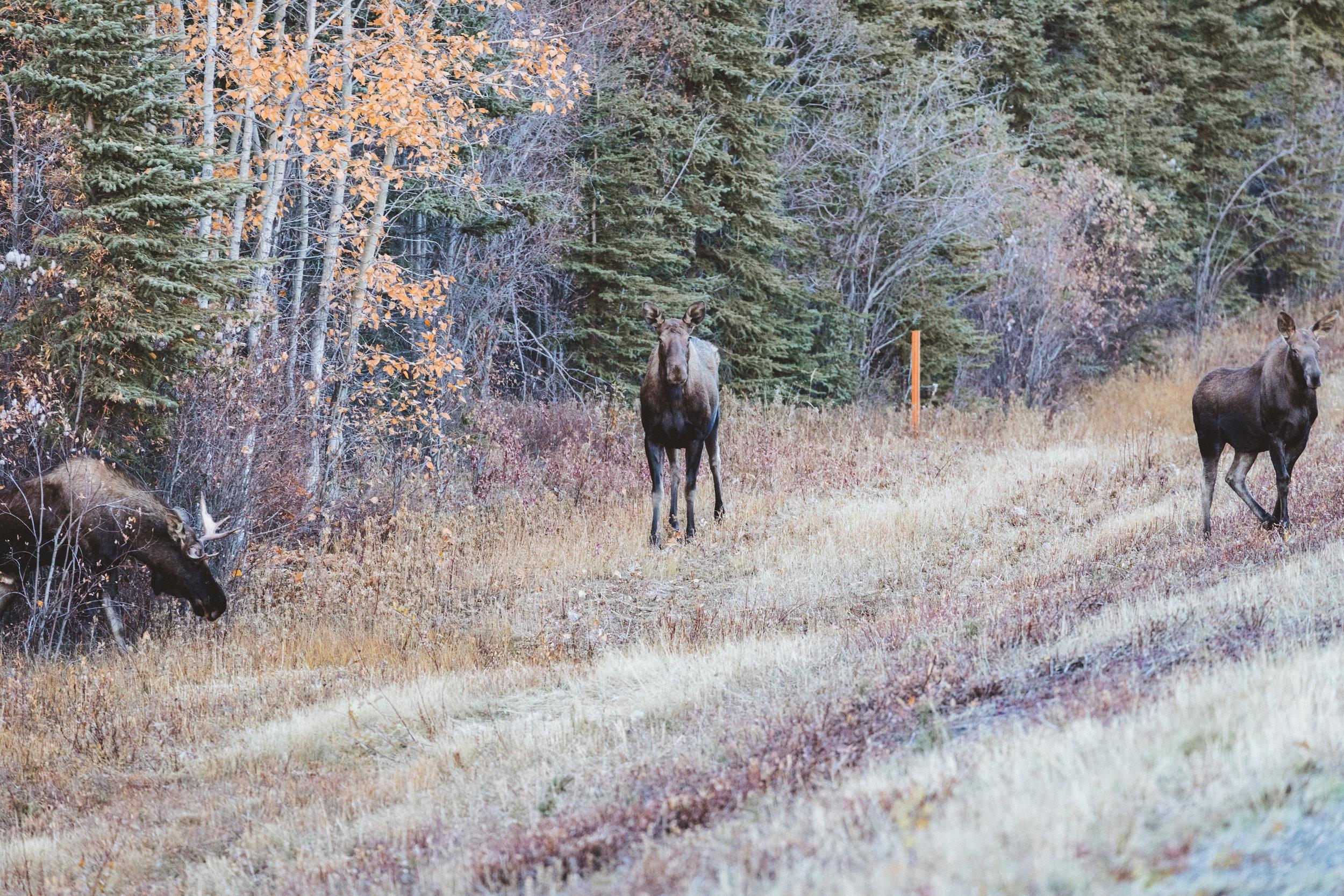 Alaska Edits-177.jpg