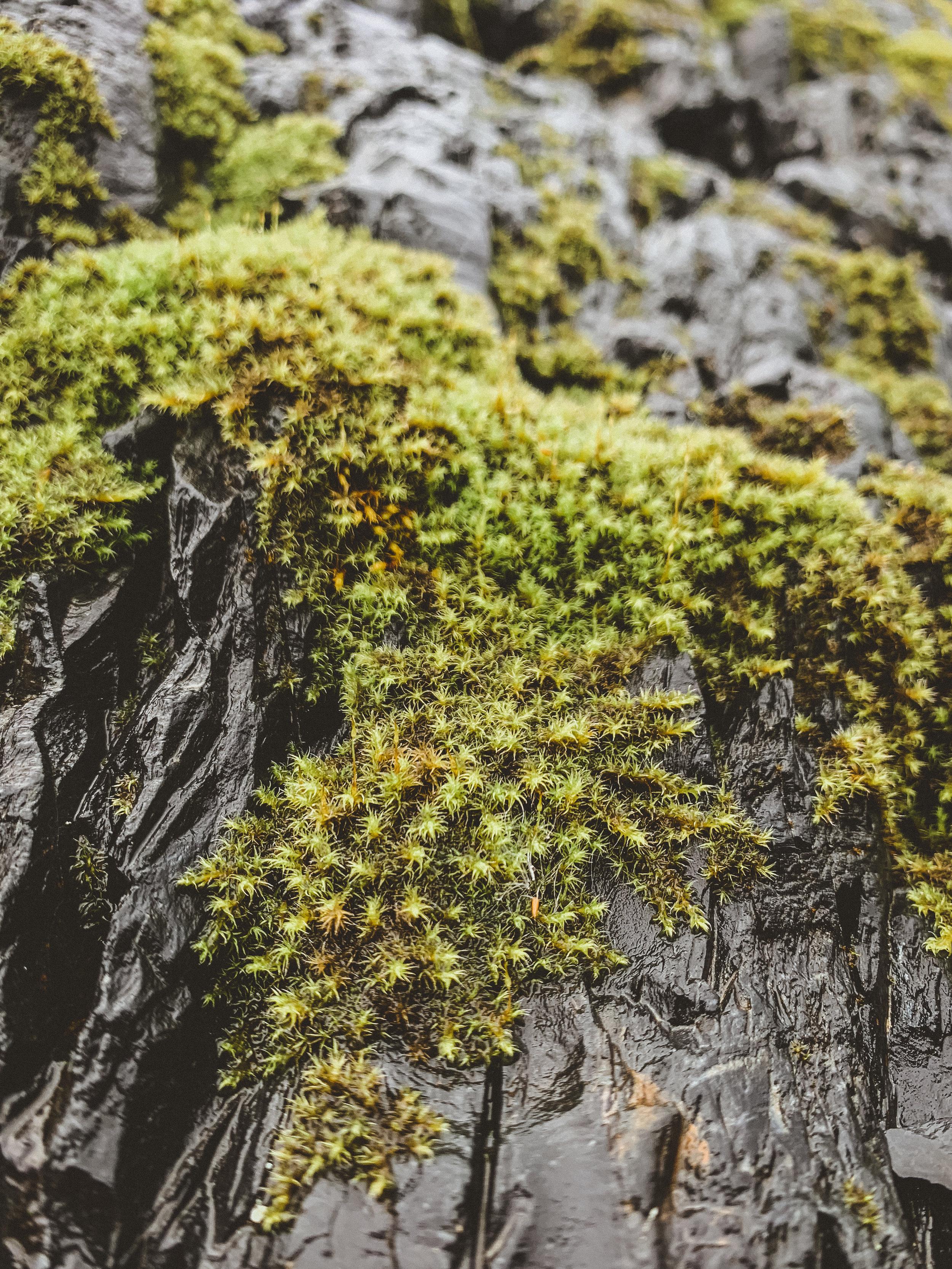 Alaska Edits-242.jpg