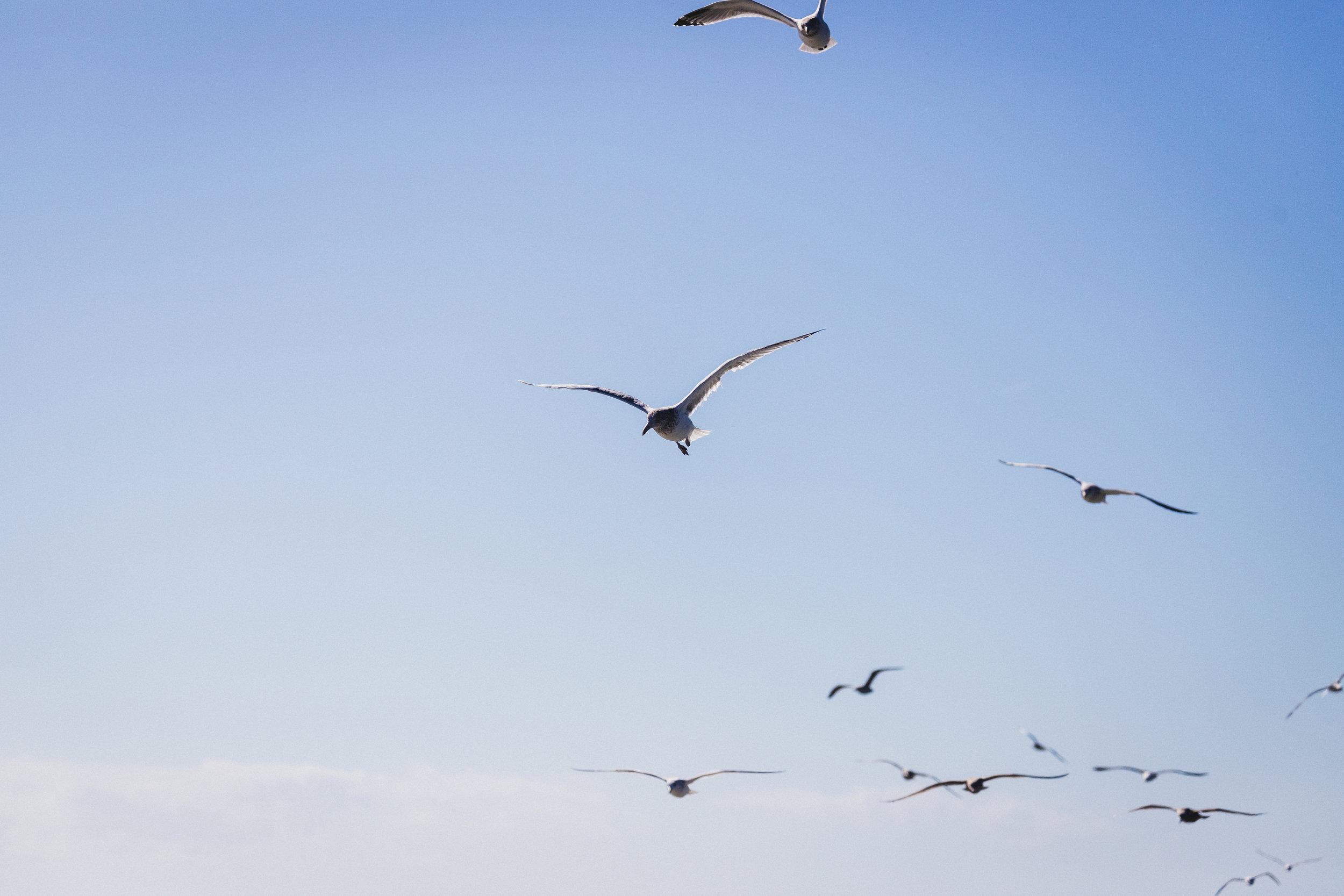 Outer Banks Edits-12.jpg