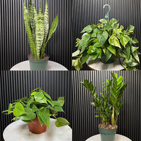 Low-light loving plants from Good Roots