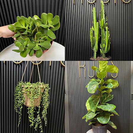 Sun Seeking plants from Good Roots