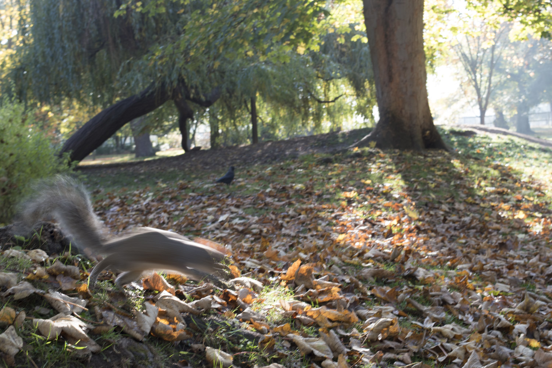 woodland_gardens_sq_2_1500.jpg