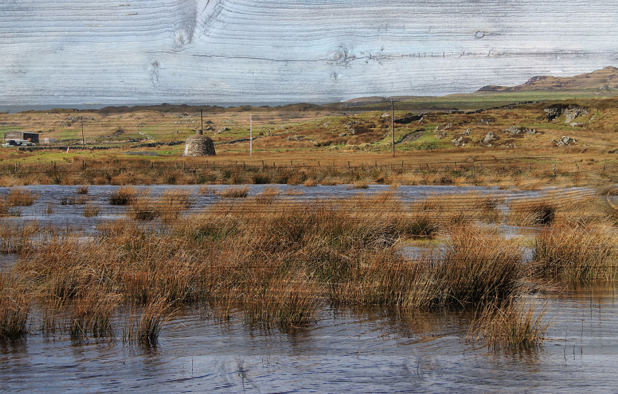 The Swamps of Islay