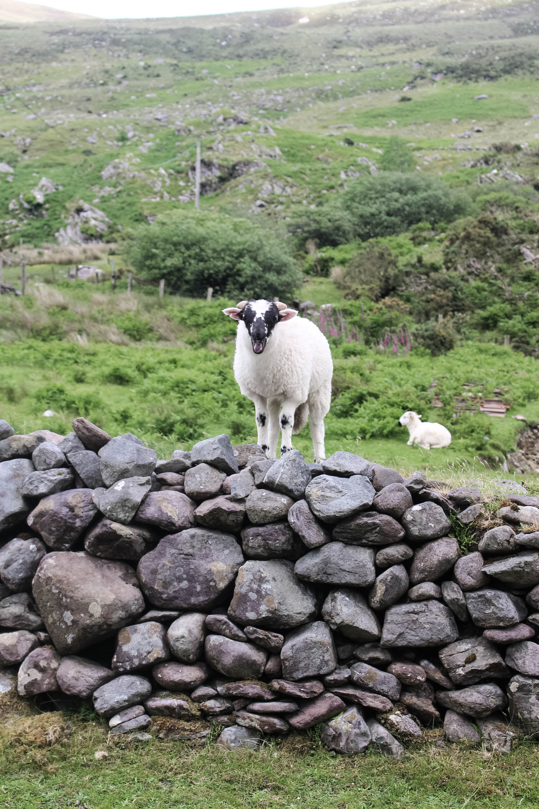 7 days in Ireland - Things to do - True North Paper Co. Blog