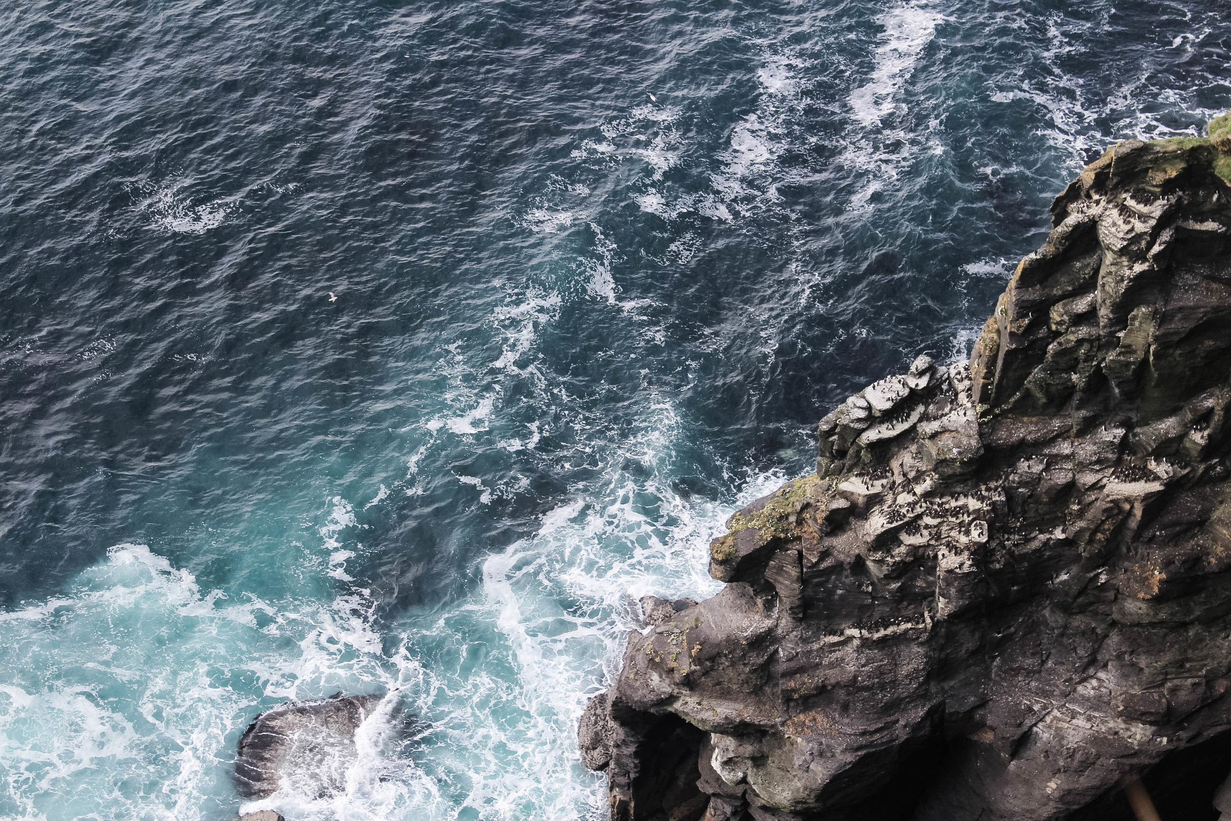 Puffins at the Cliffs of Moher, Ireland - Coastal Cliff Walk - Clare County, Ireland things to do