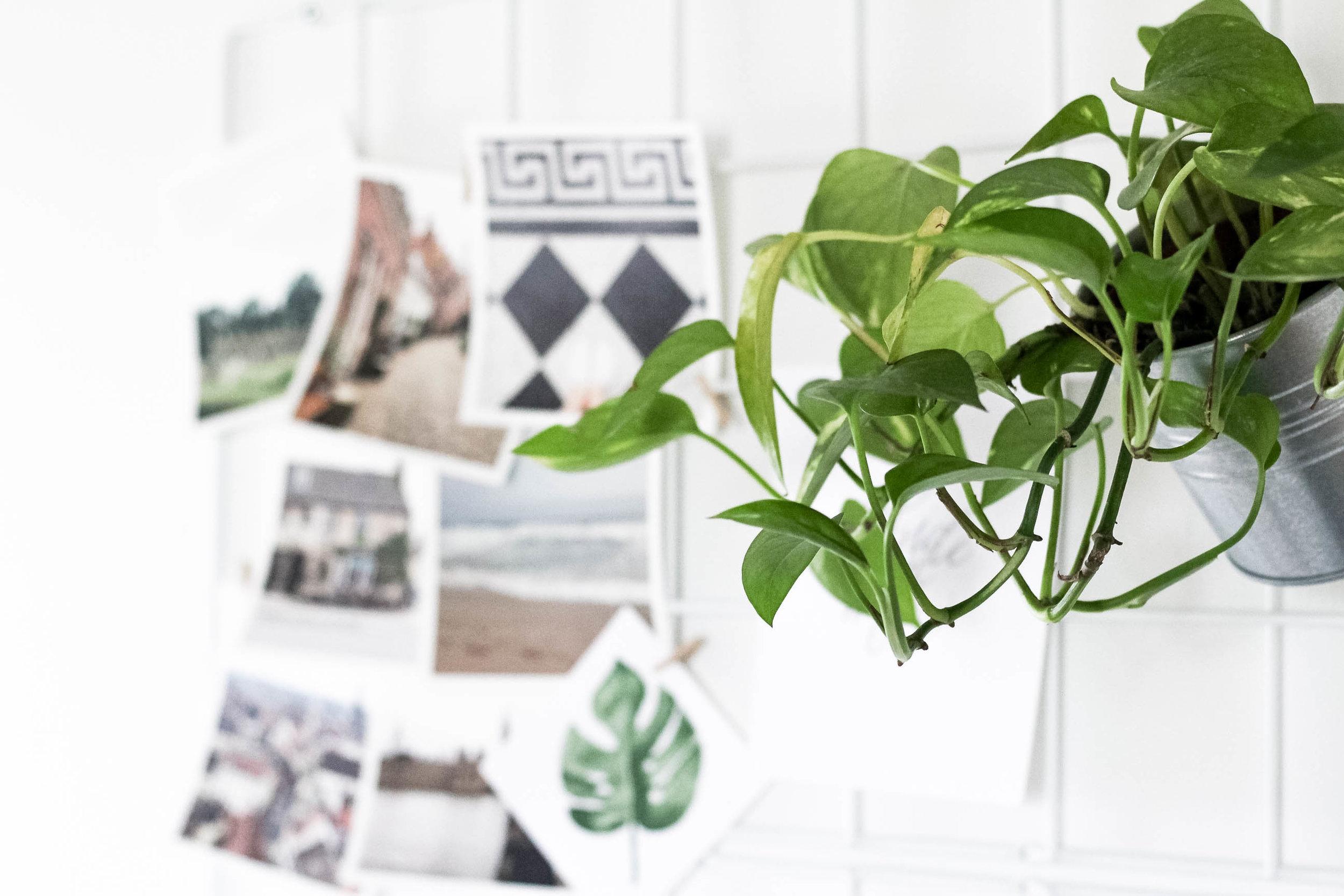 Small Office Space Tour - Ikea Barso Trellis - True North Paper Co.