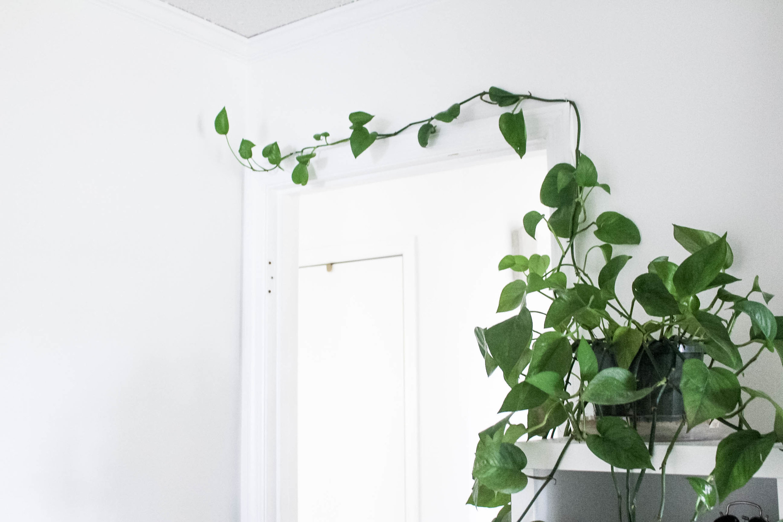 Green Hanging Plant in White Office - True North Paper Co.