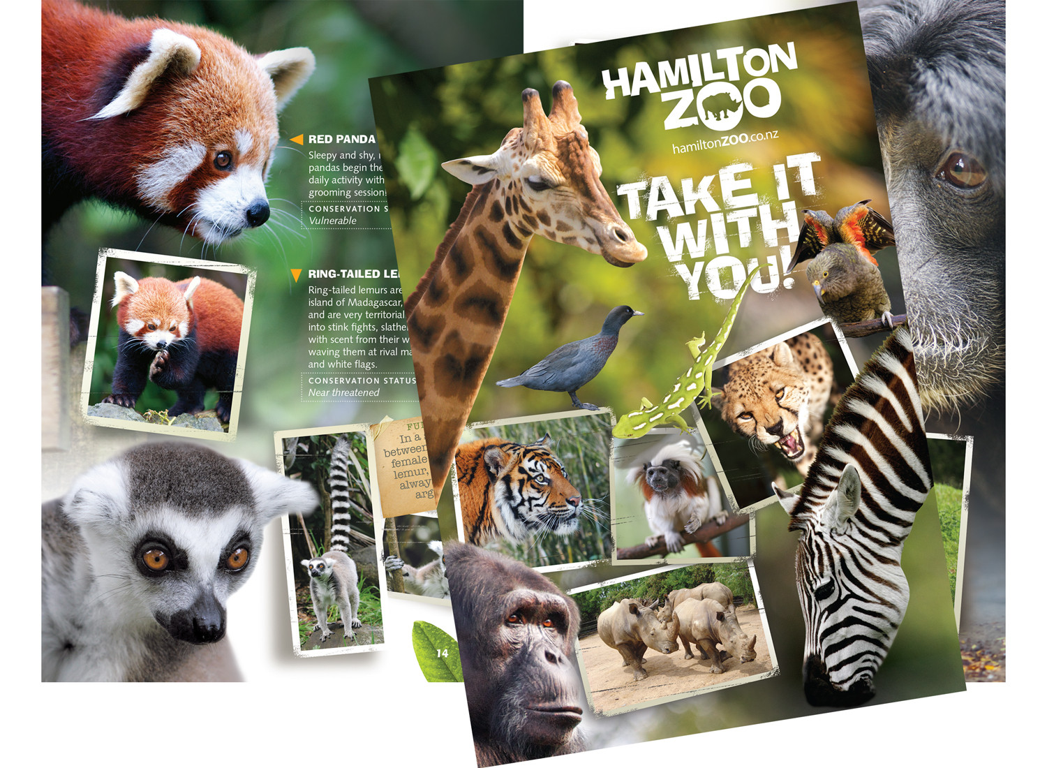 A5 zoo guide book