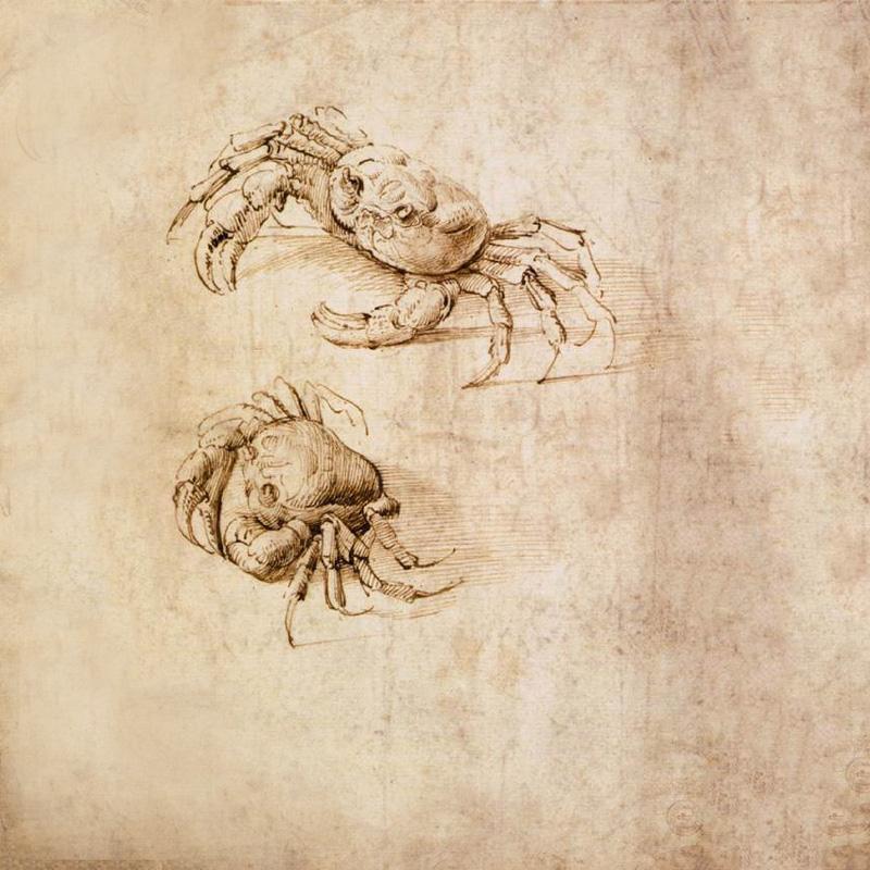 Crustáceos 2