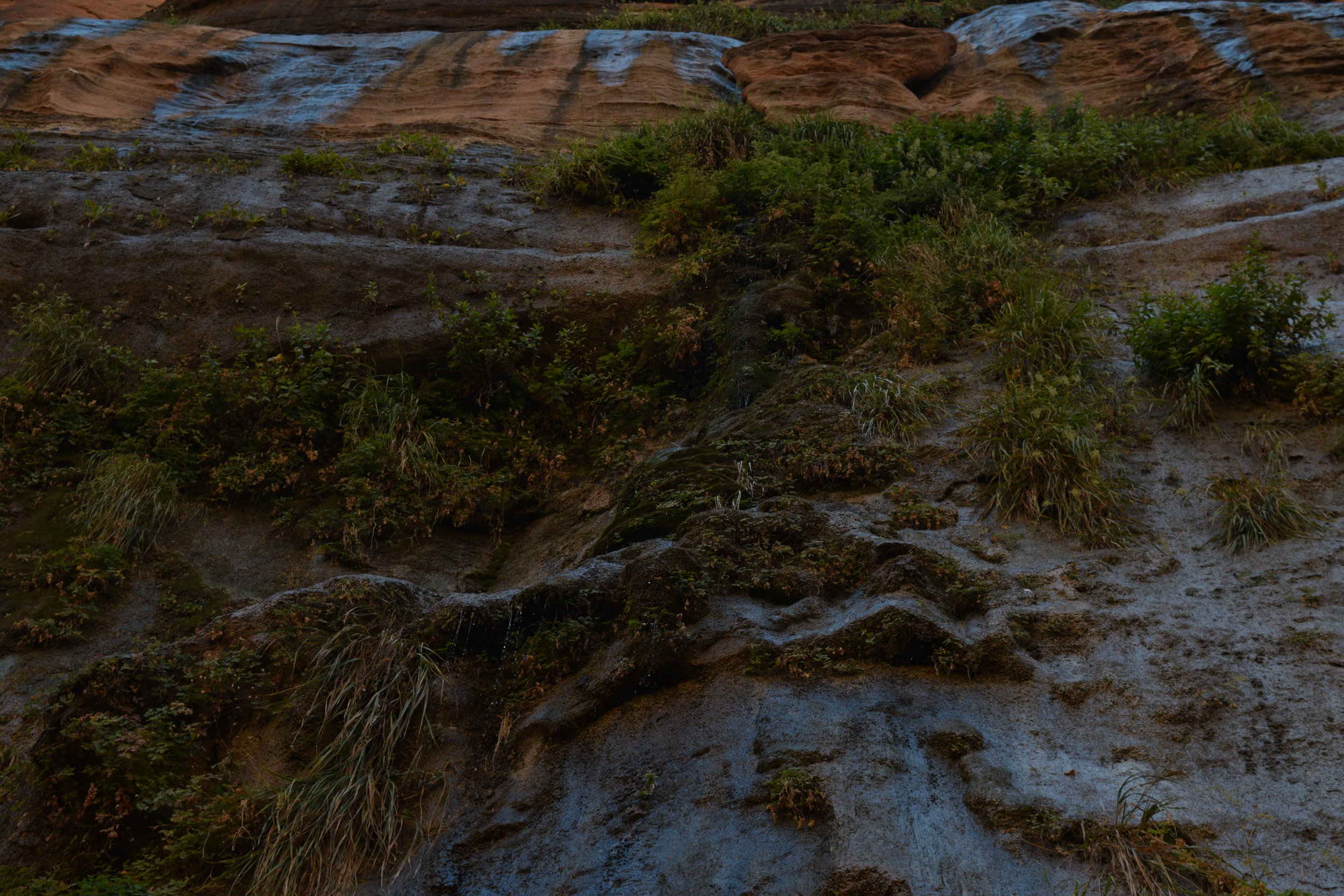A shot of the 'Hanging Gardens' toward the mouth of the canyon.