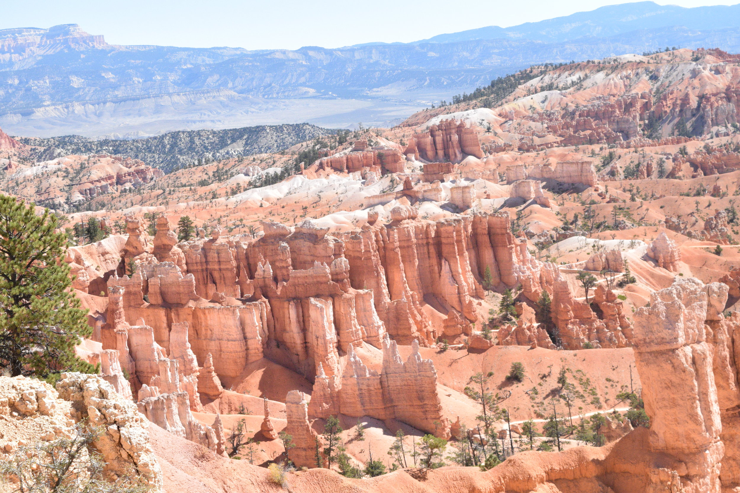 These Hoodoos, so named because the early settlers thought looking at them would put you under their spell, made up a large portion of the park. Carved in sandstone these Hoodoos provided a truly magnificent view.