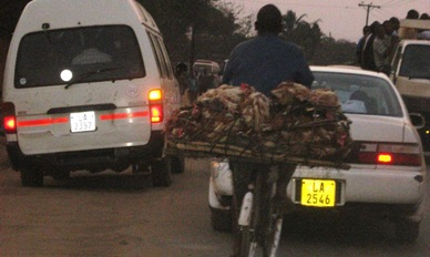 a cyclist transports chickens in the midst of rush hour traffic.