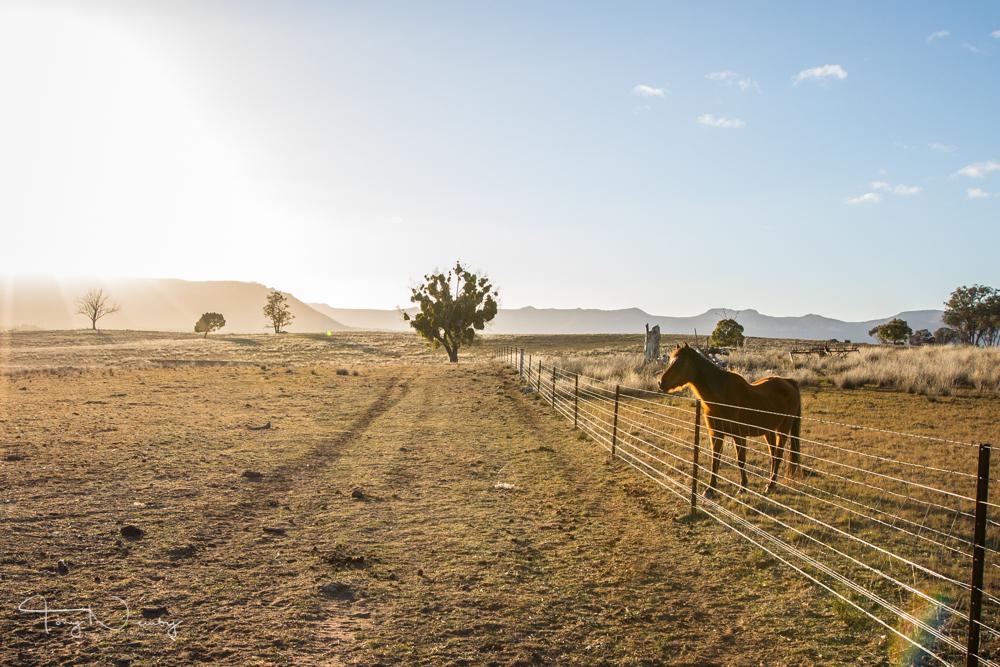 Capertee Valley Glen Alice horse-396.jpg