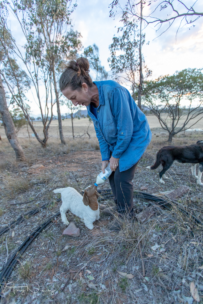 Yarraglen Homestead goat hand feeding.jpg