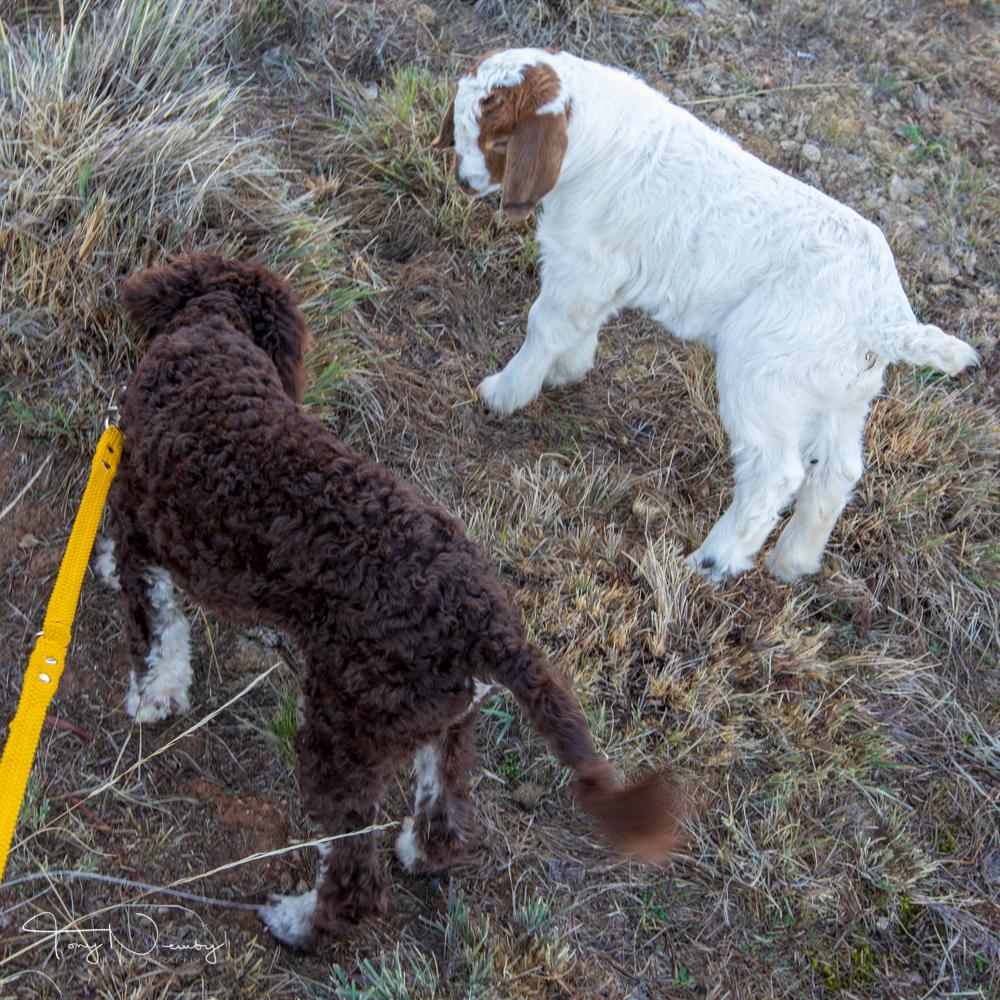 Yarraglen Homestead pup and kid.jpg
